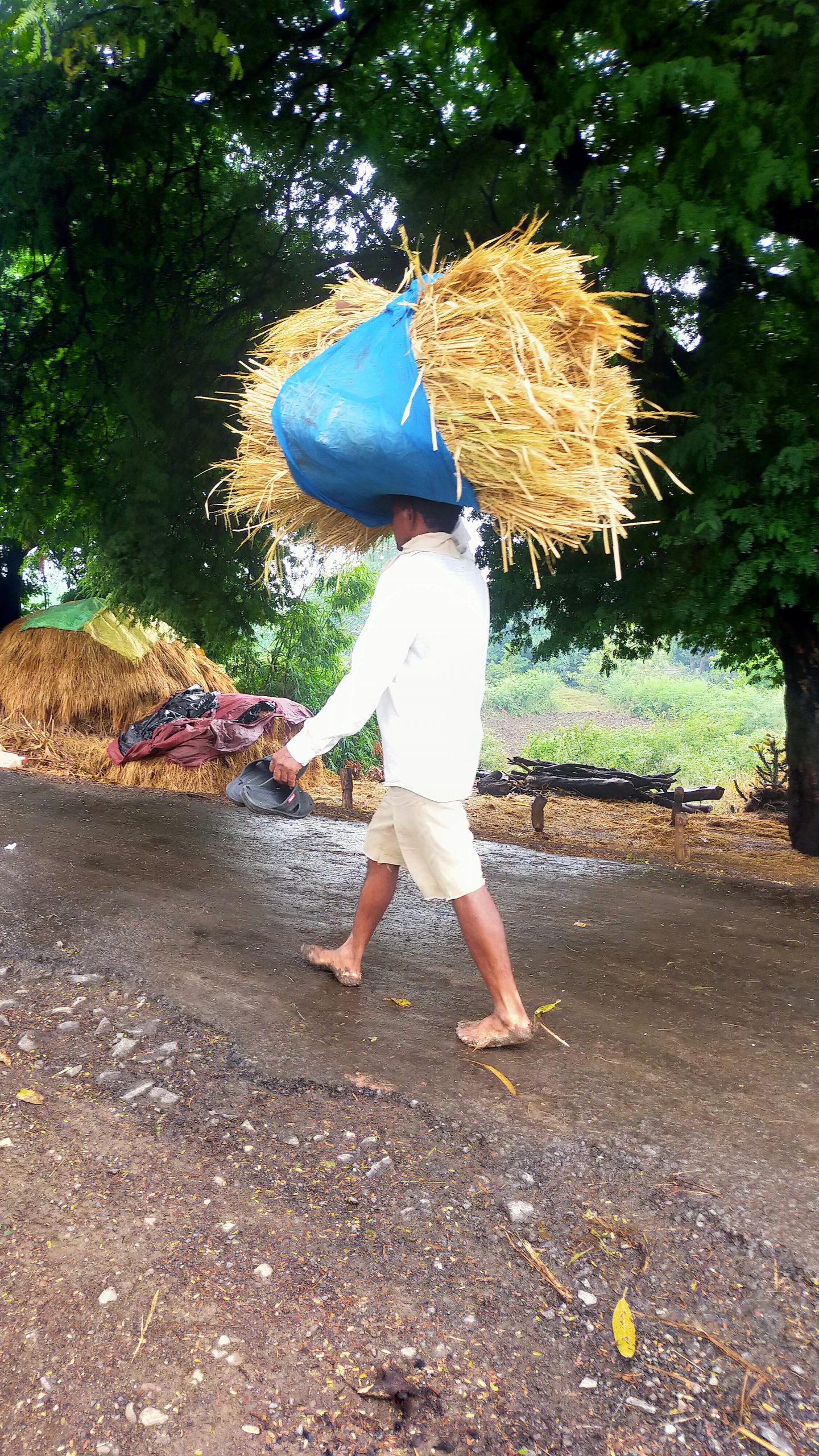 farmer lifting rice straws