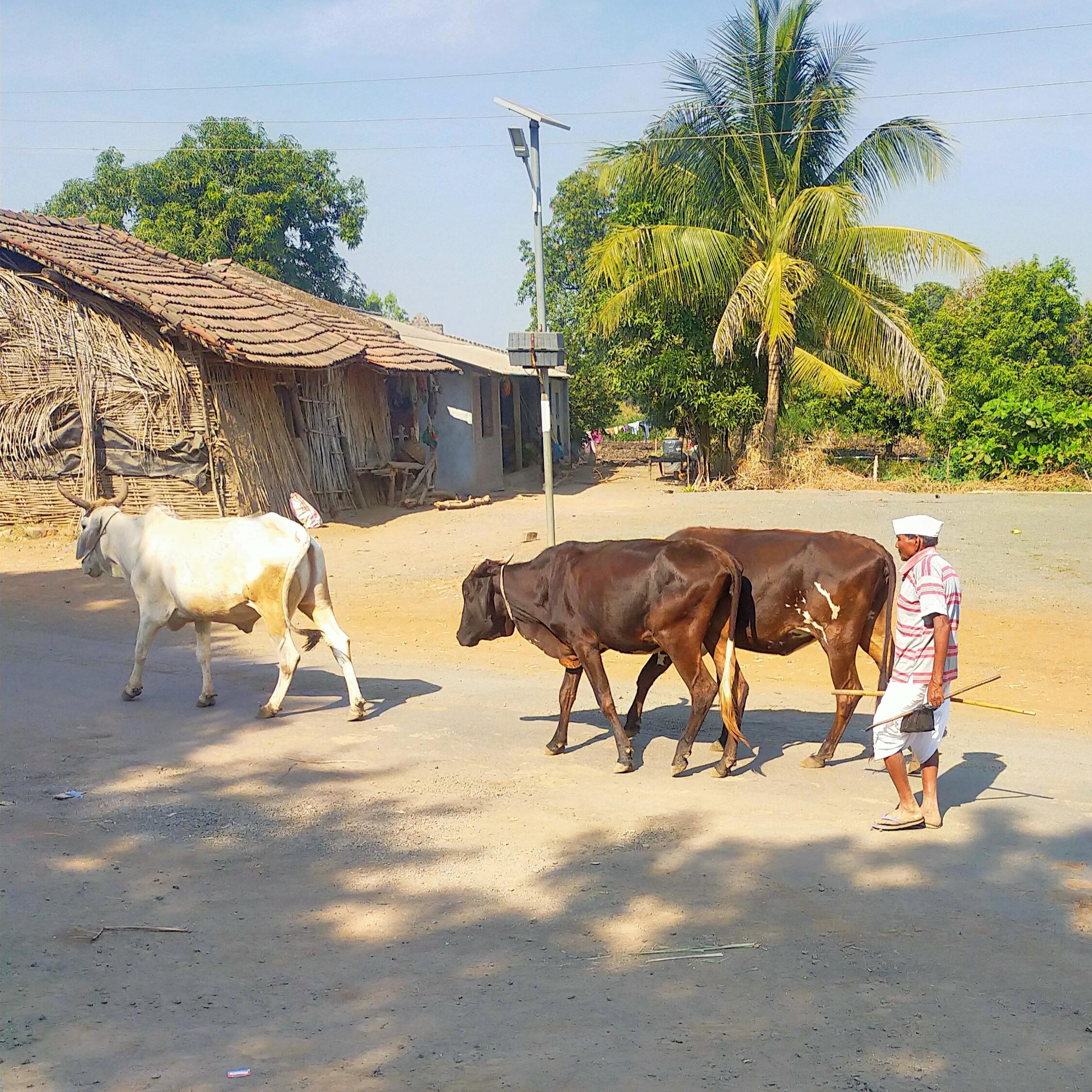 A farmer with cow