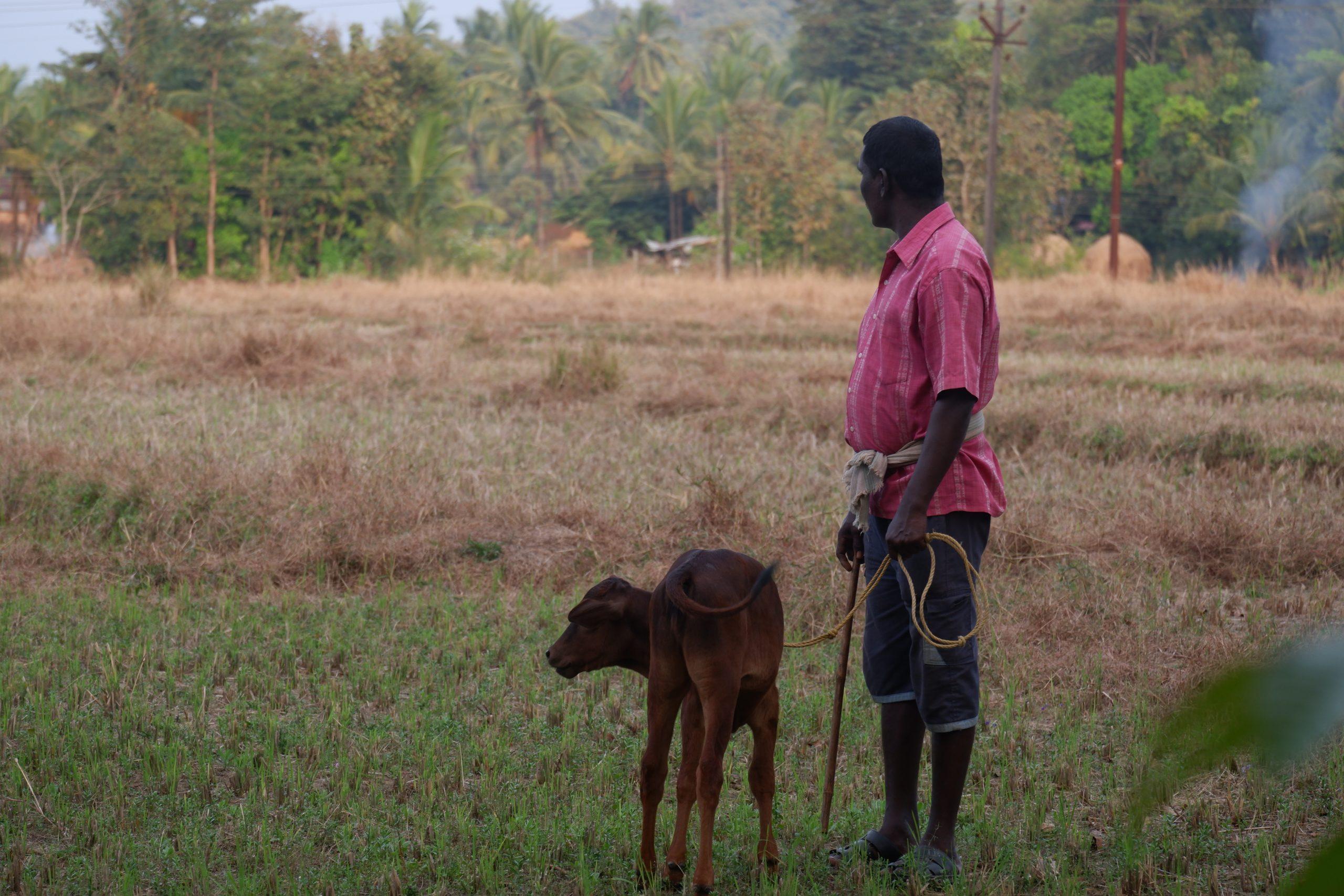 A farmer with his calf