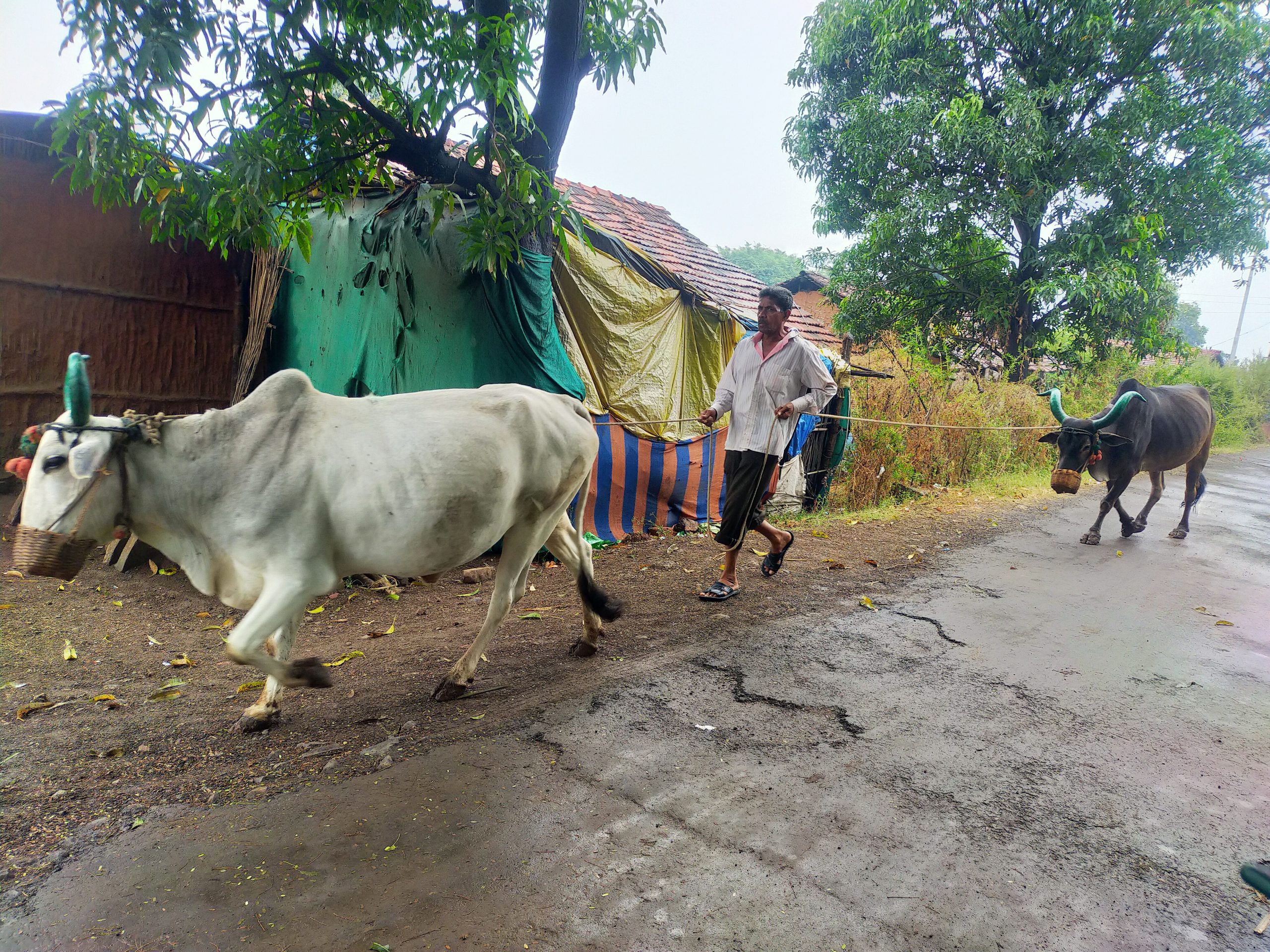 A farmer with his oxen