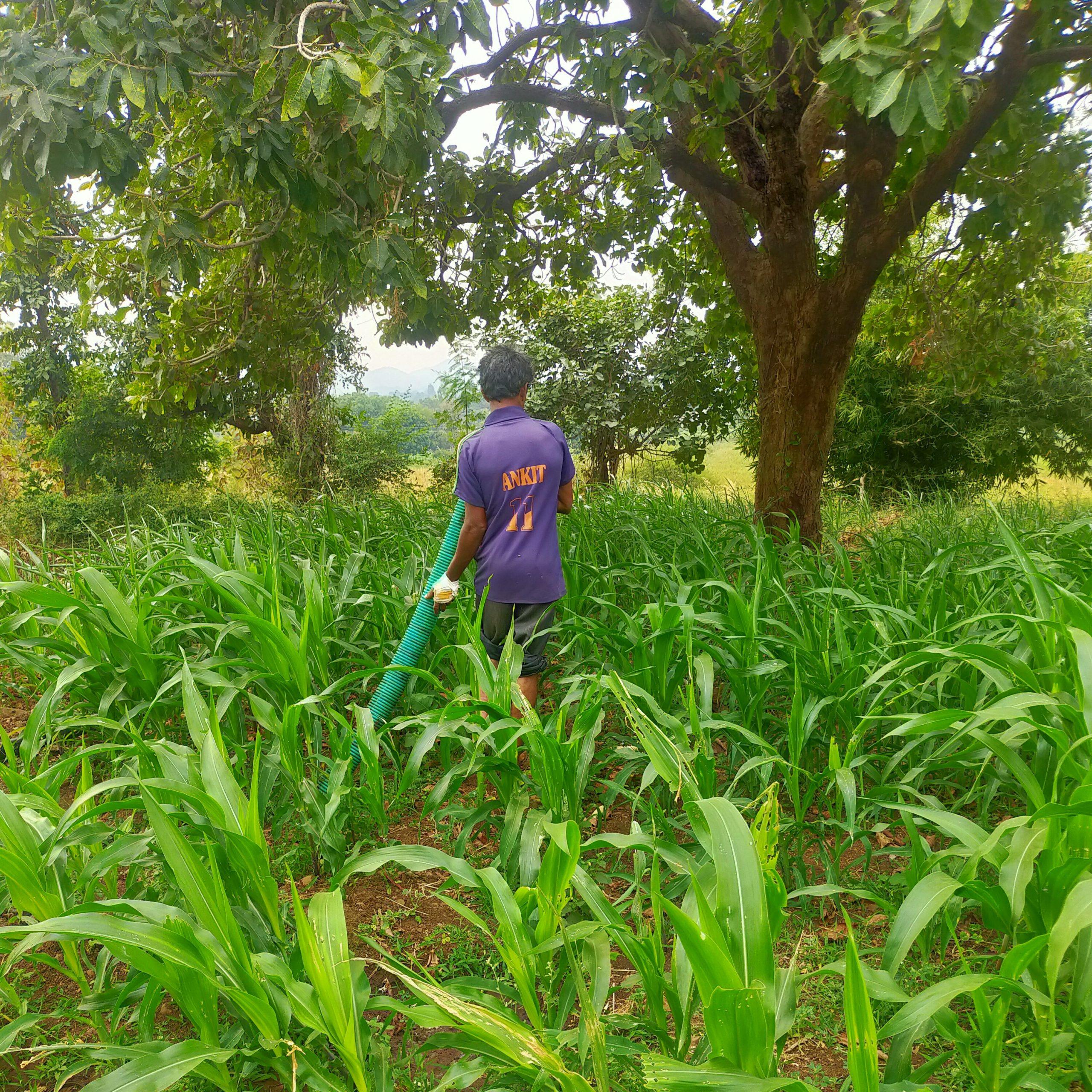farmer working in a farm