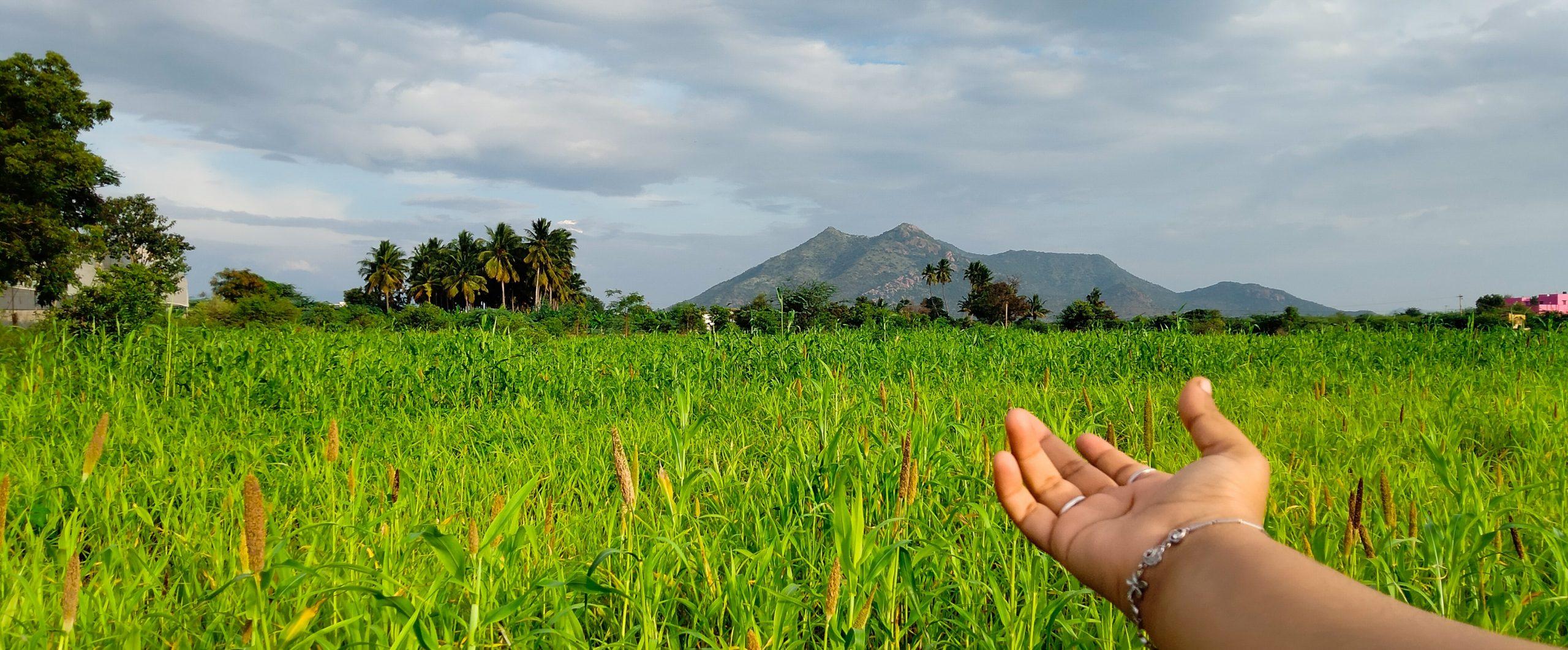 A farmer's hand towards crops
