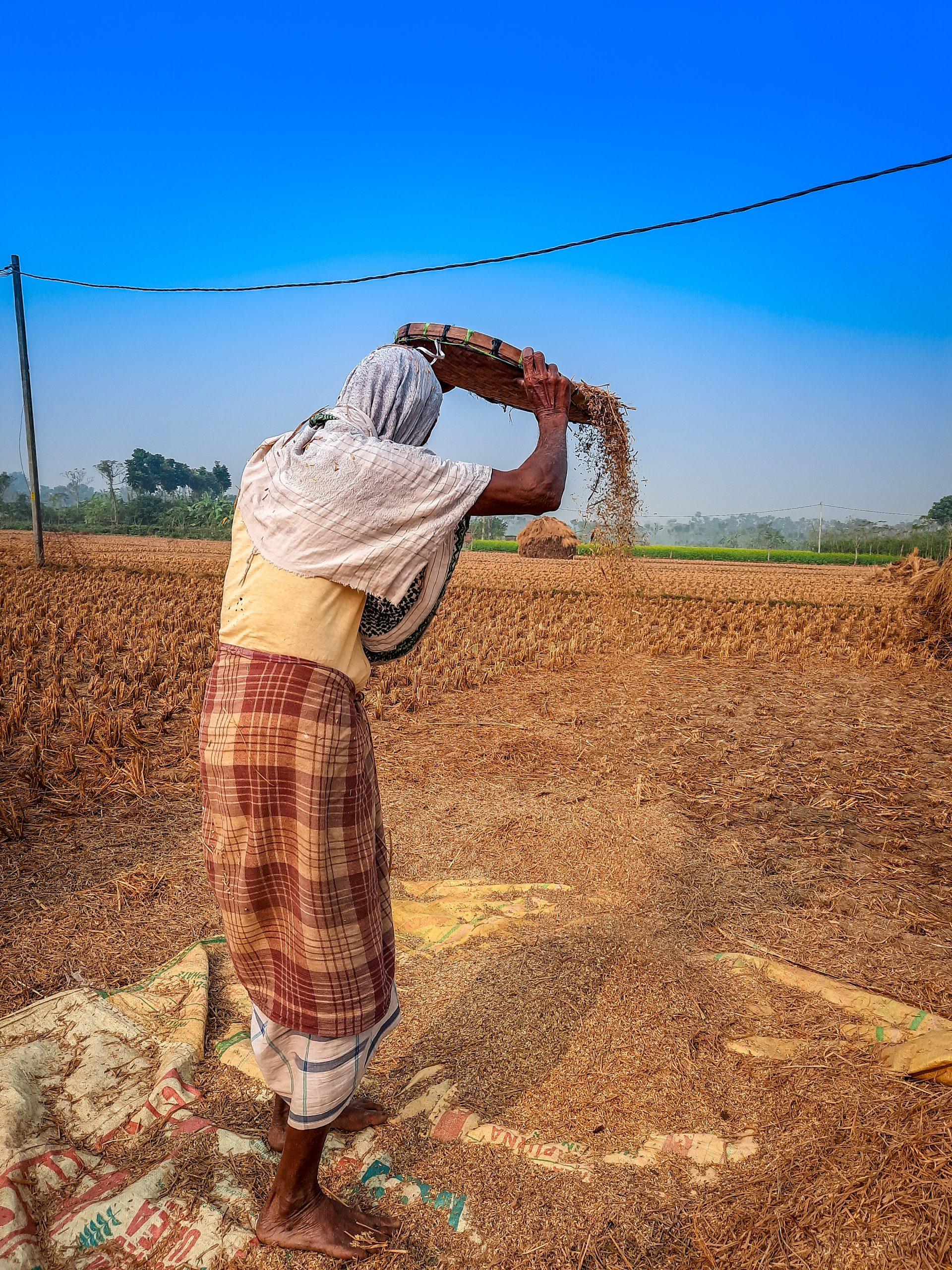 A farmer cleaning grains