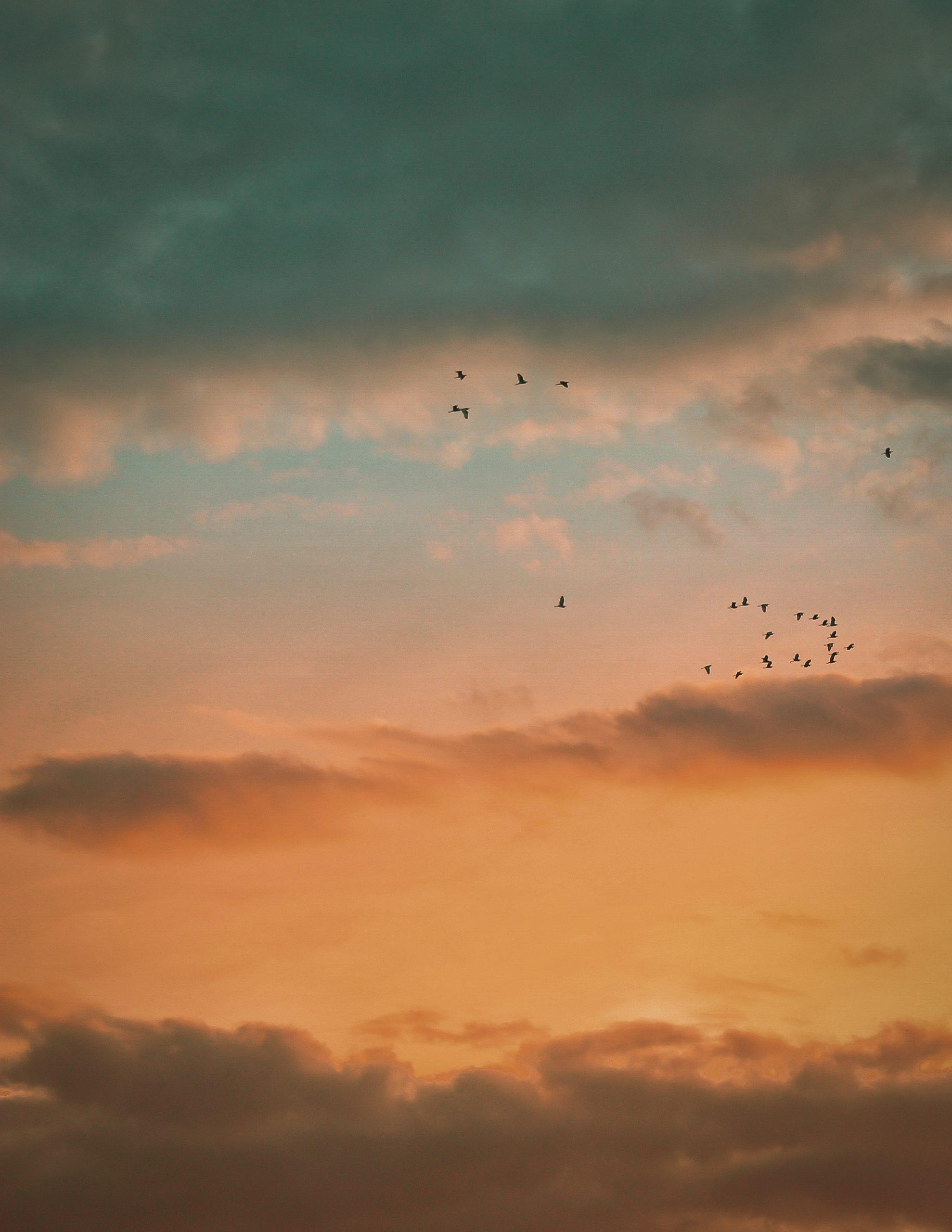 A flock during evening