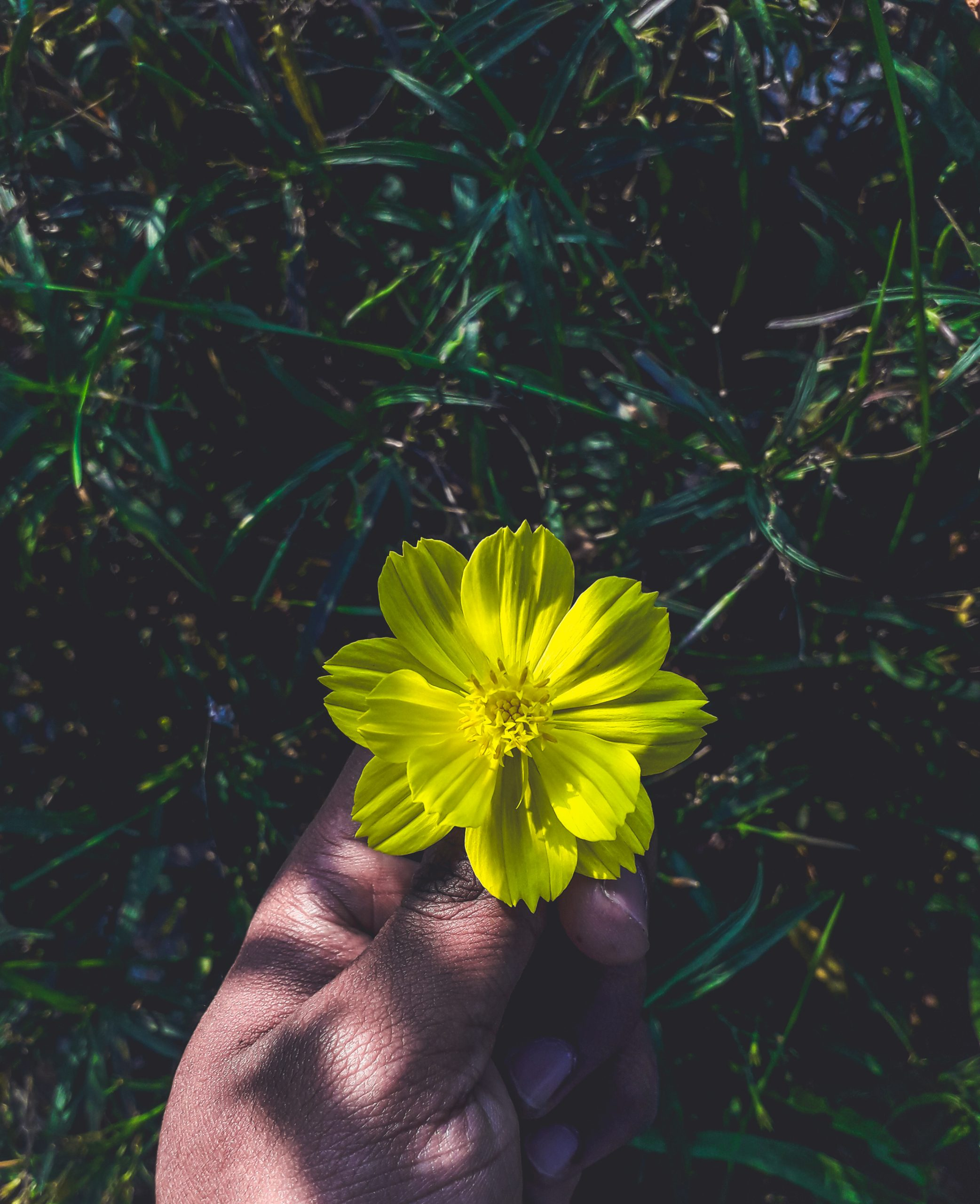 A flower in hand