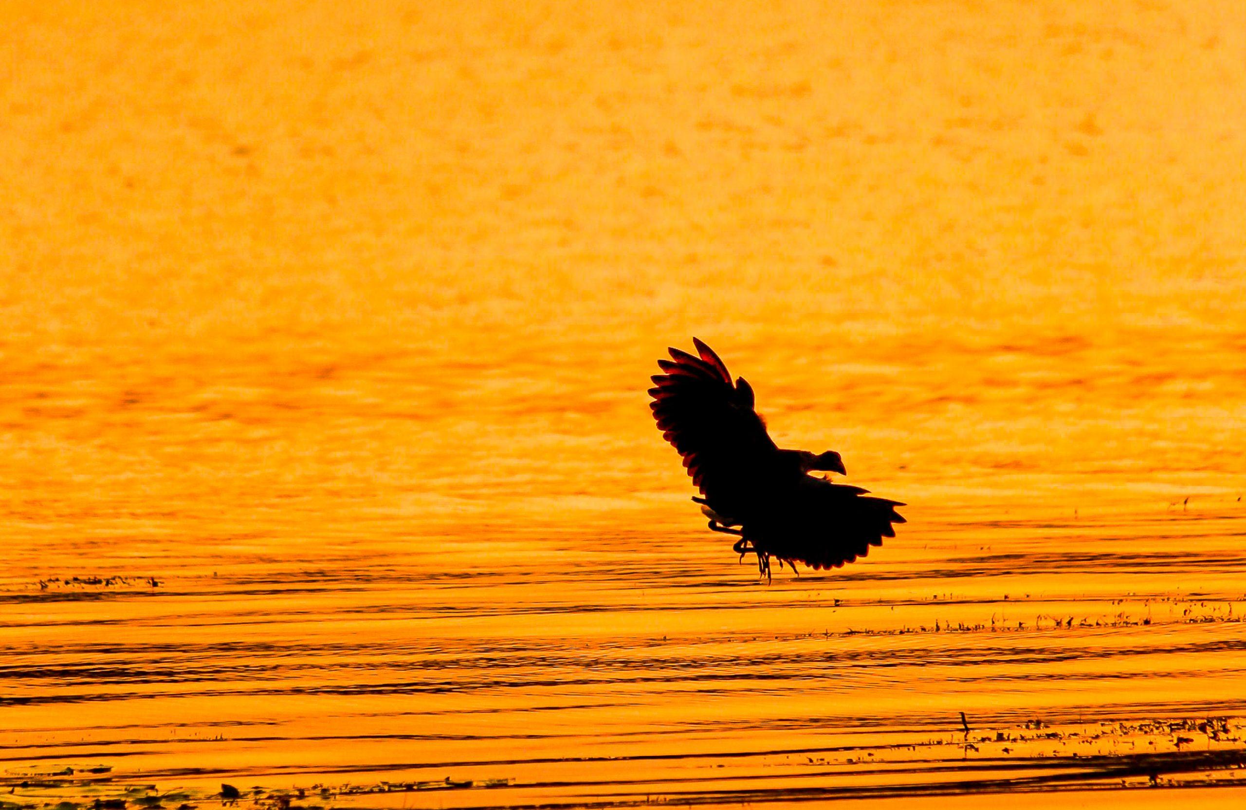 A flying bird
