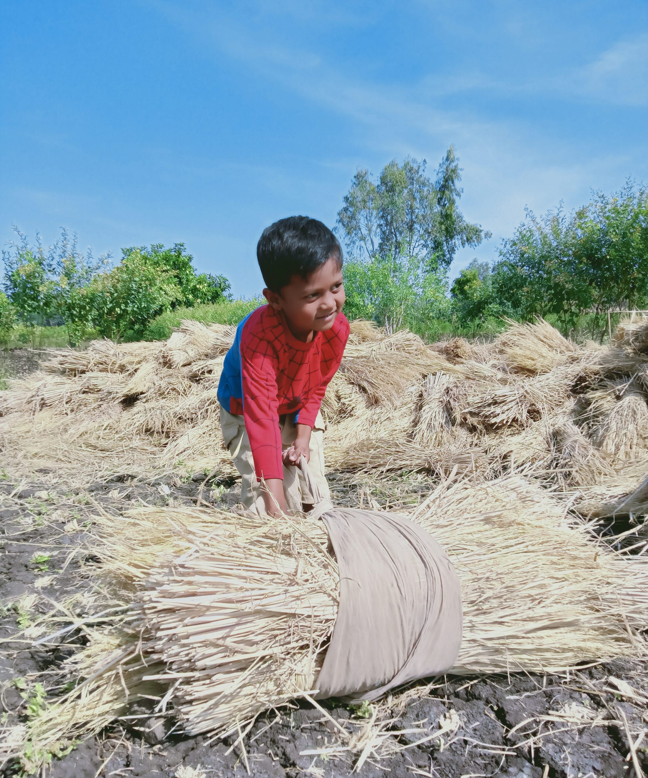 A kid trying to lift crops bundle