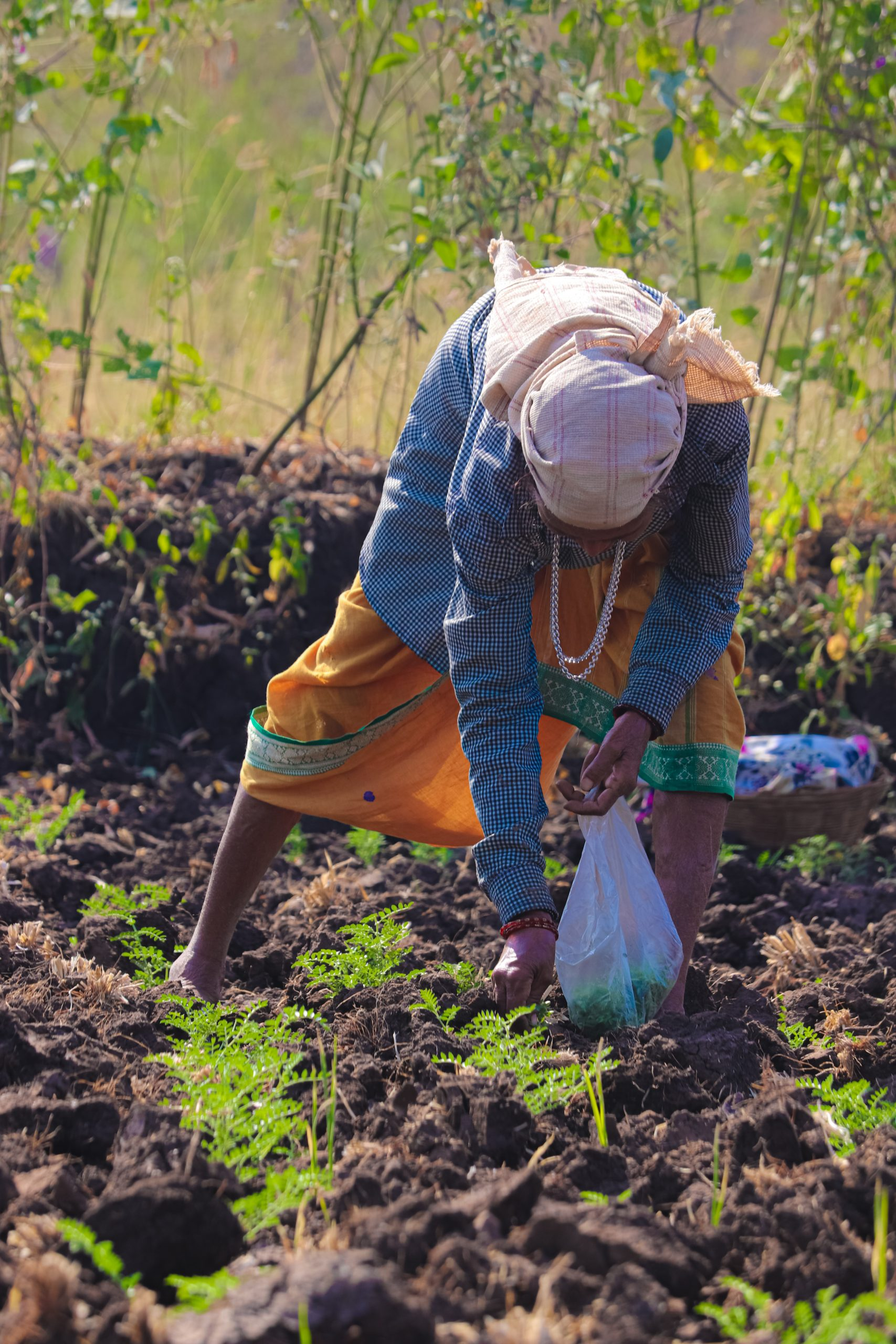 A lady farmer sowing the seeds