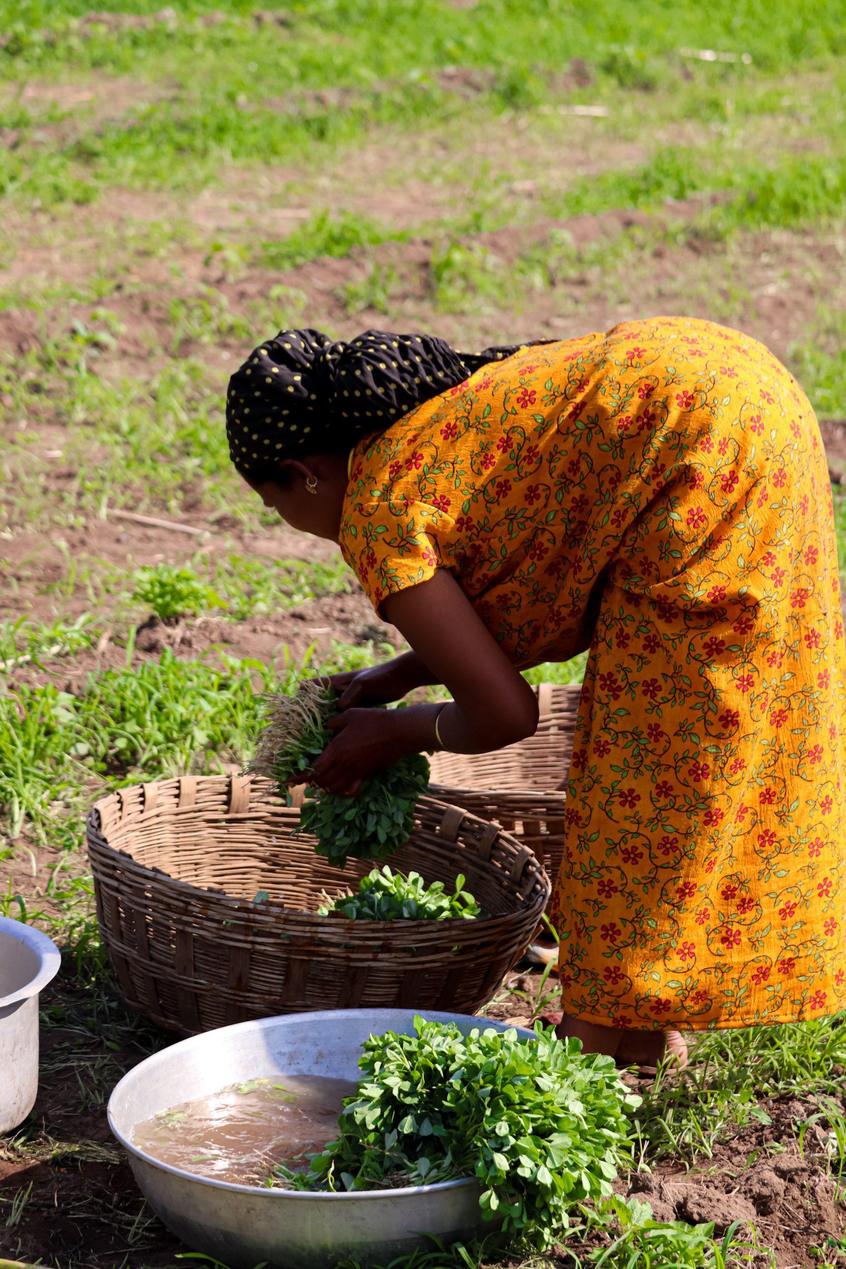 A lady farmer working in field