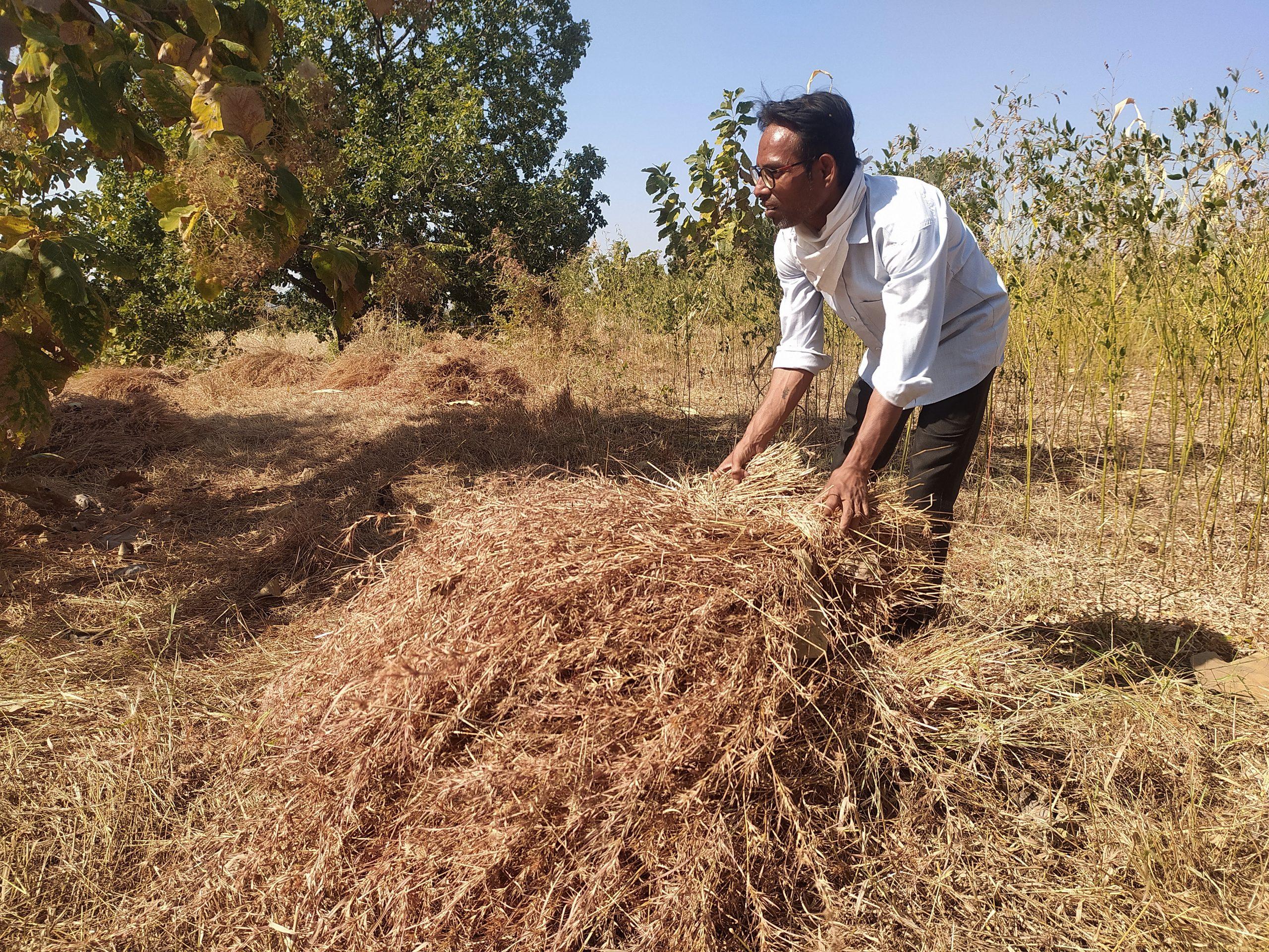 A men collect Grass