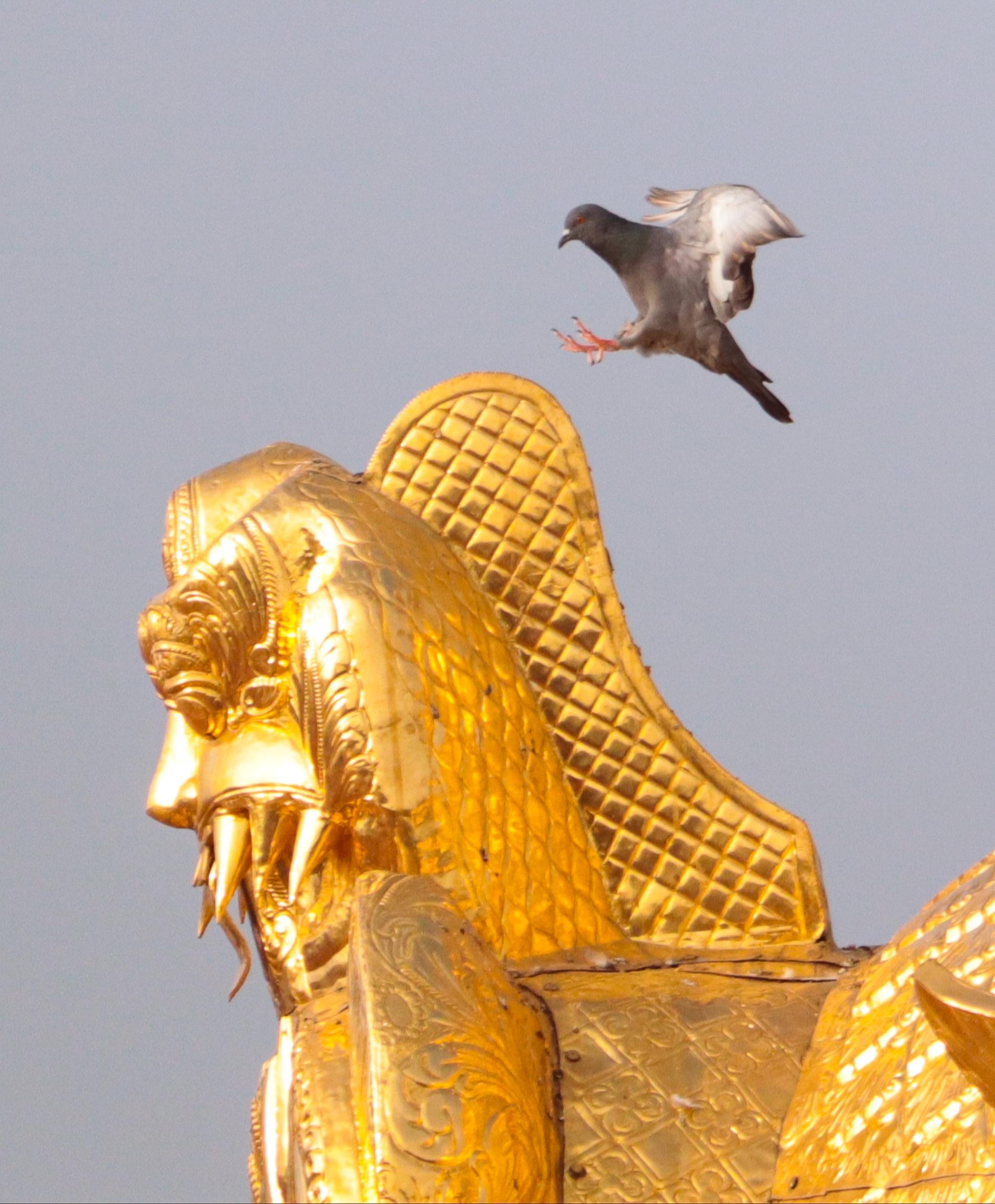 A pigeon landing on a sculpture