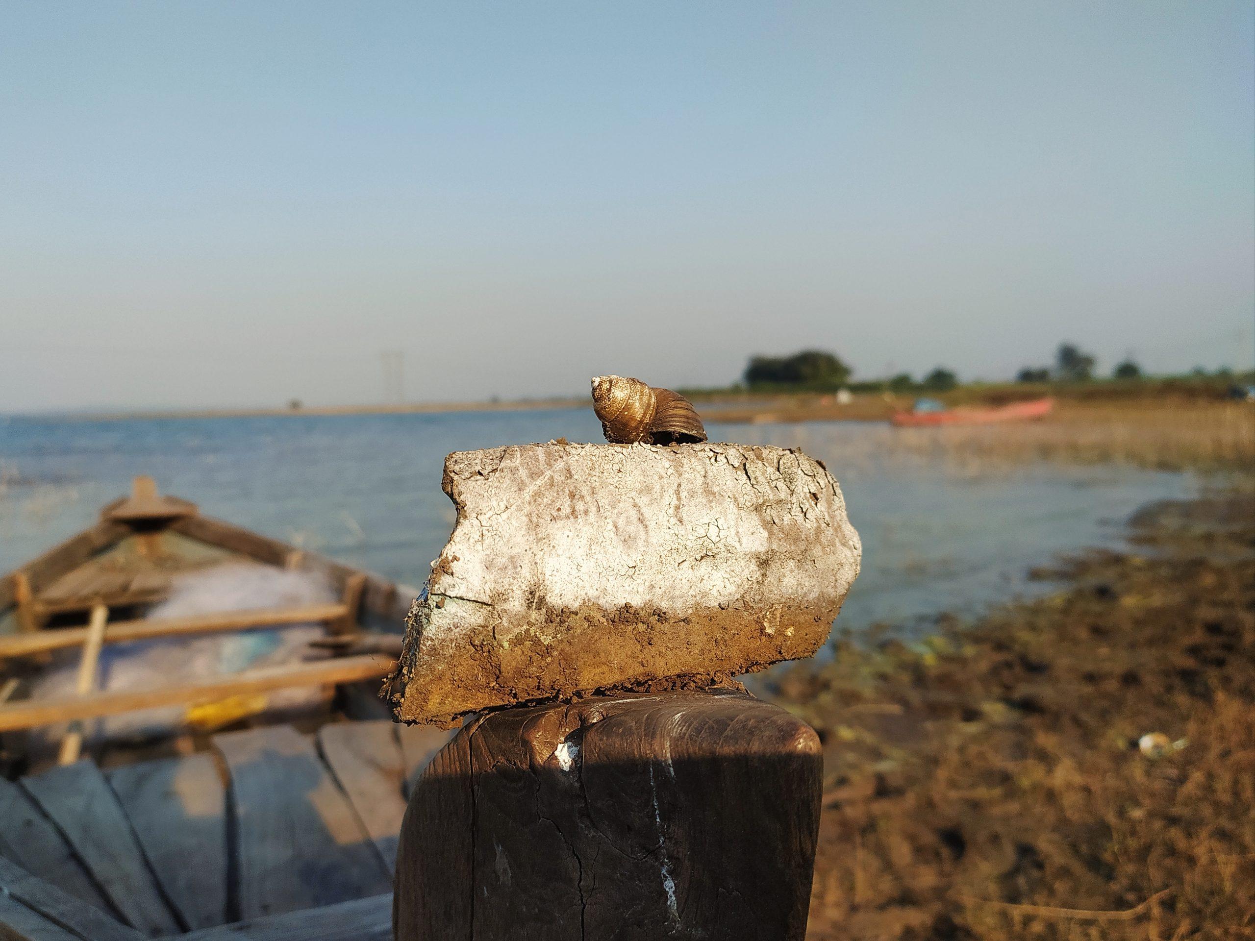 A sea shell on a stone
