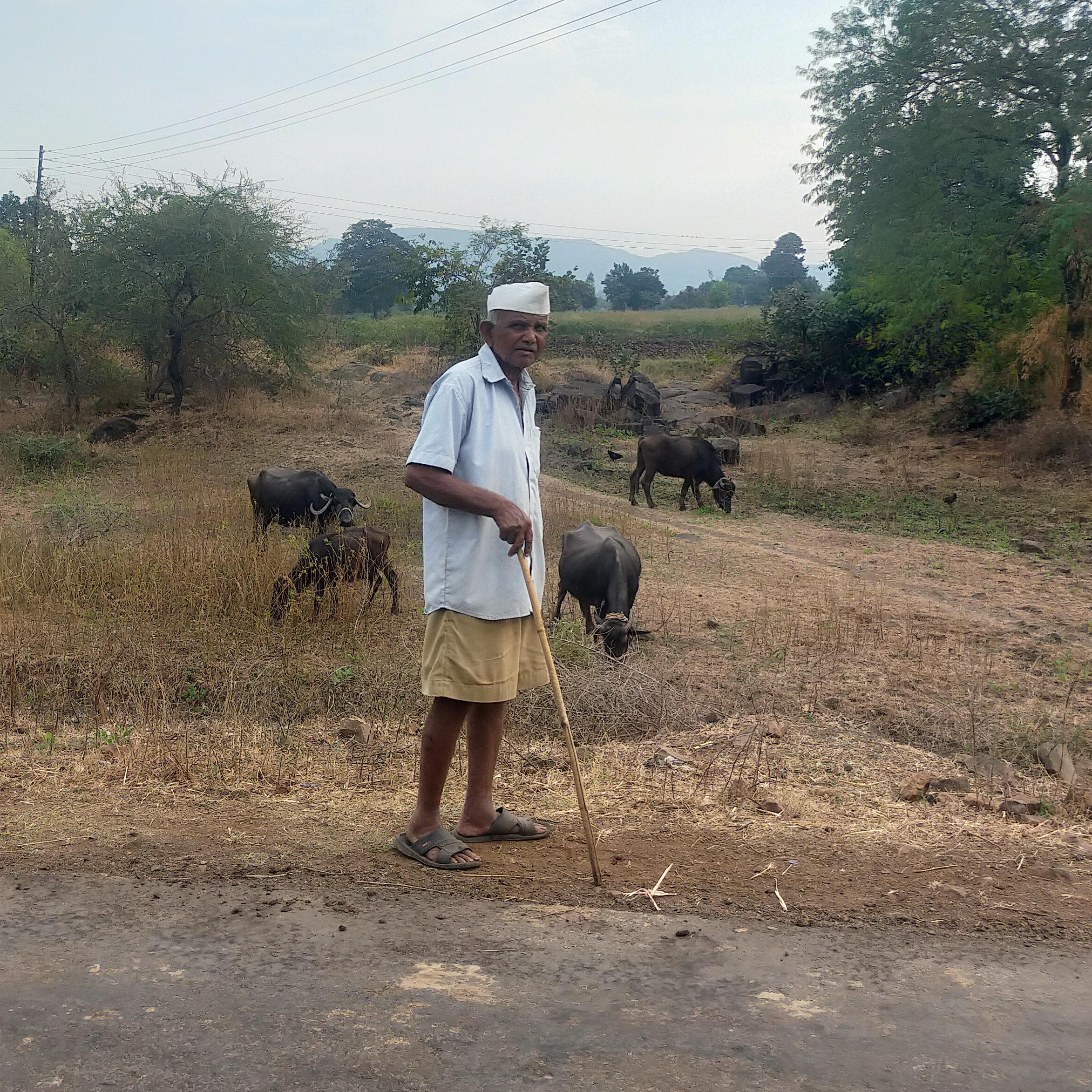 A farmer with his cattle