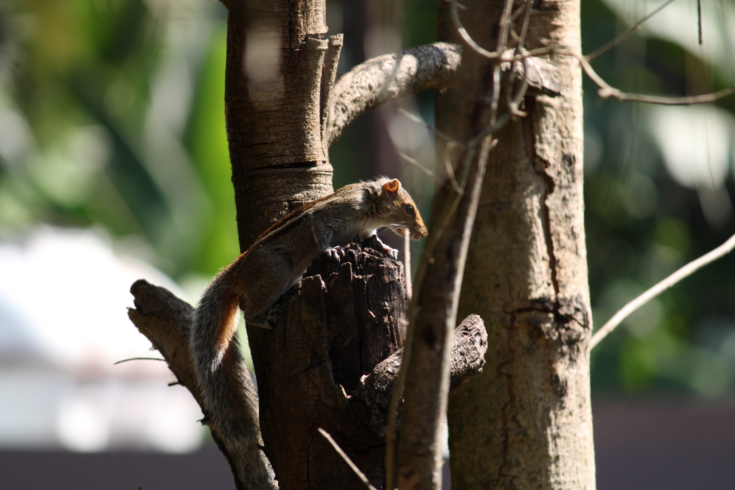 squirrel on a tree trunk