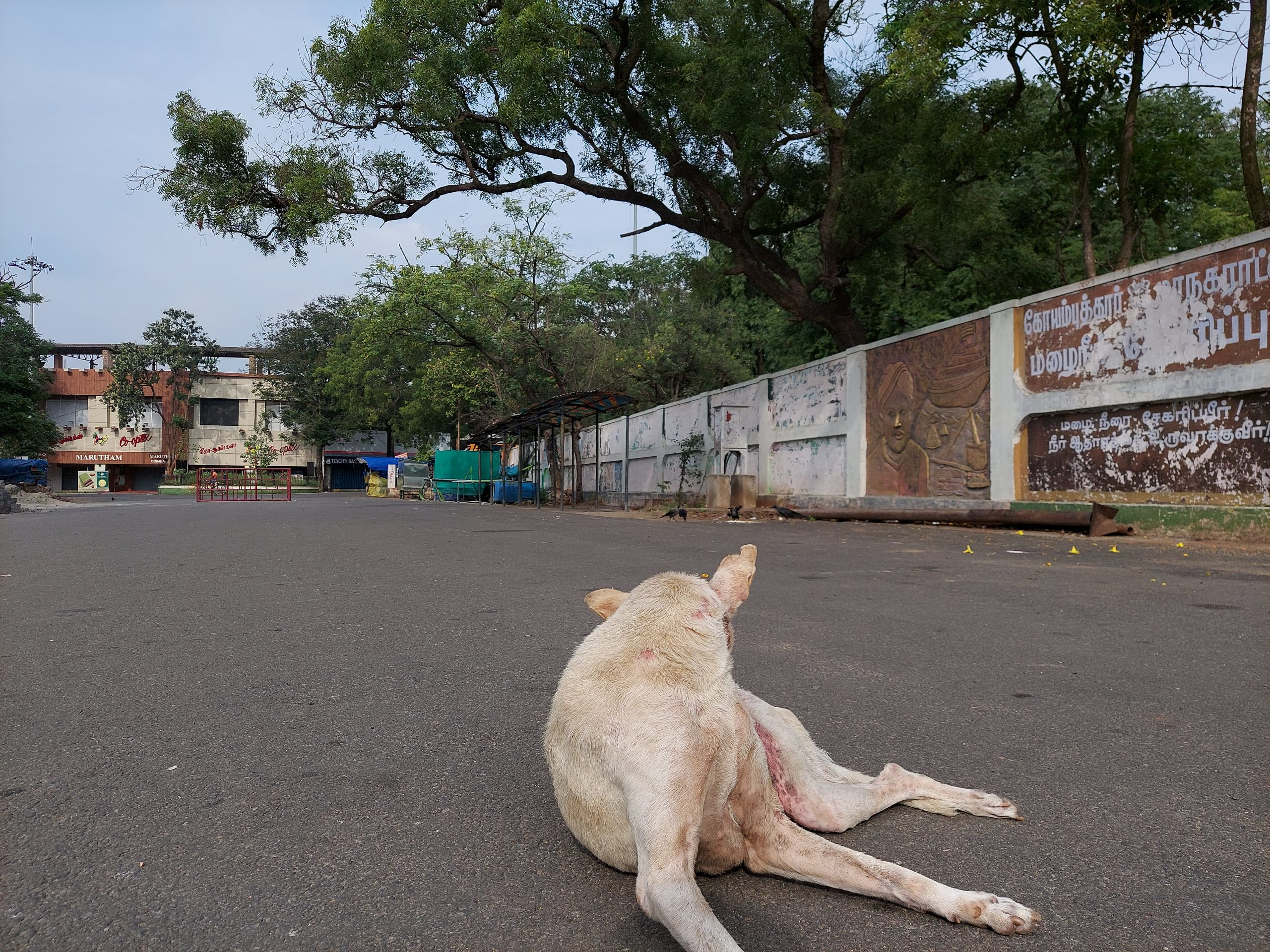 A stray dog lying on a road