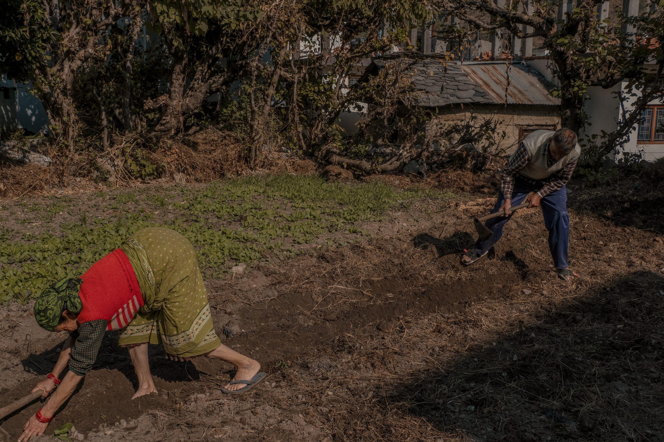 A village couple working in field