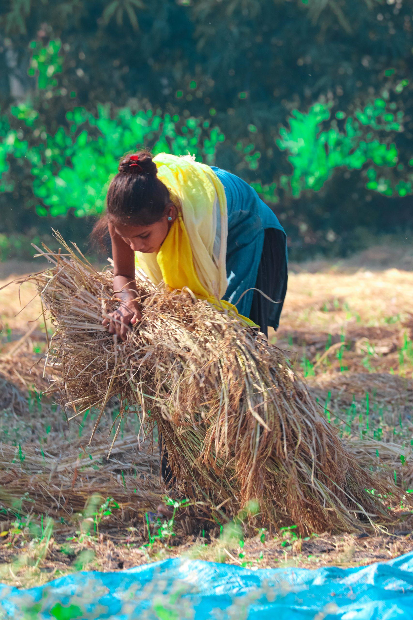 A village girl lifting grass