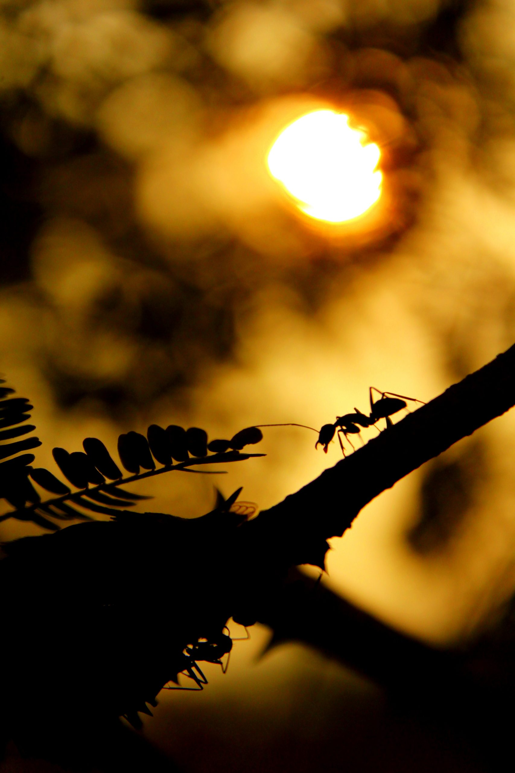 ant walking on the branch