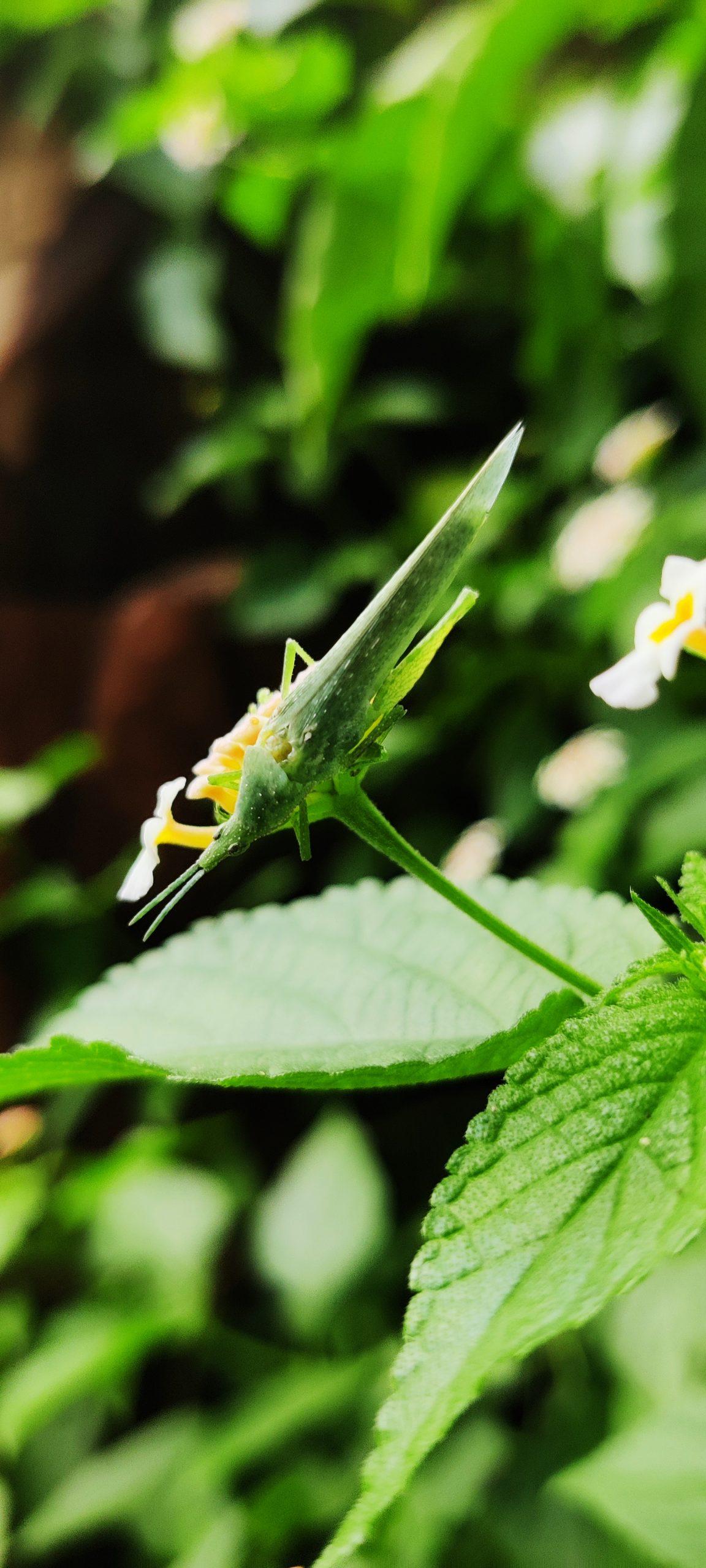 grasshopper on a flower