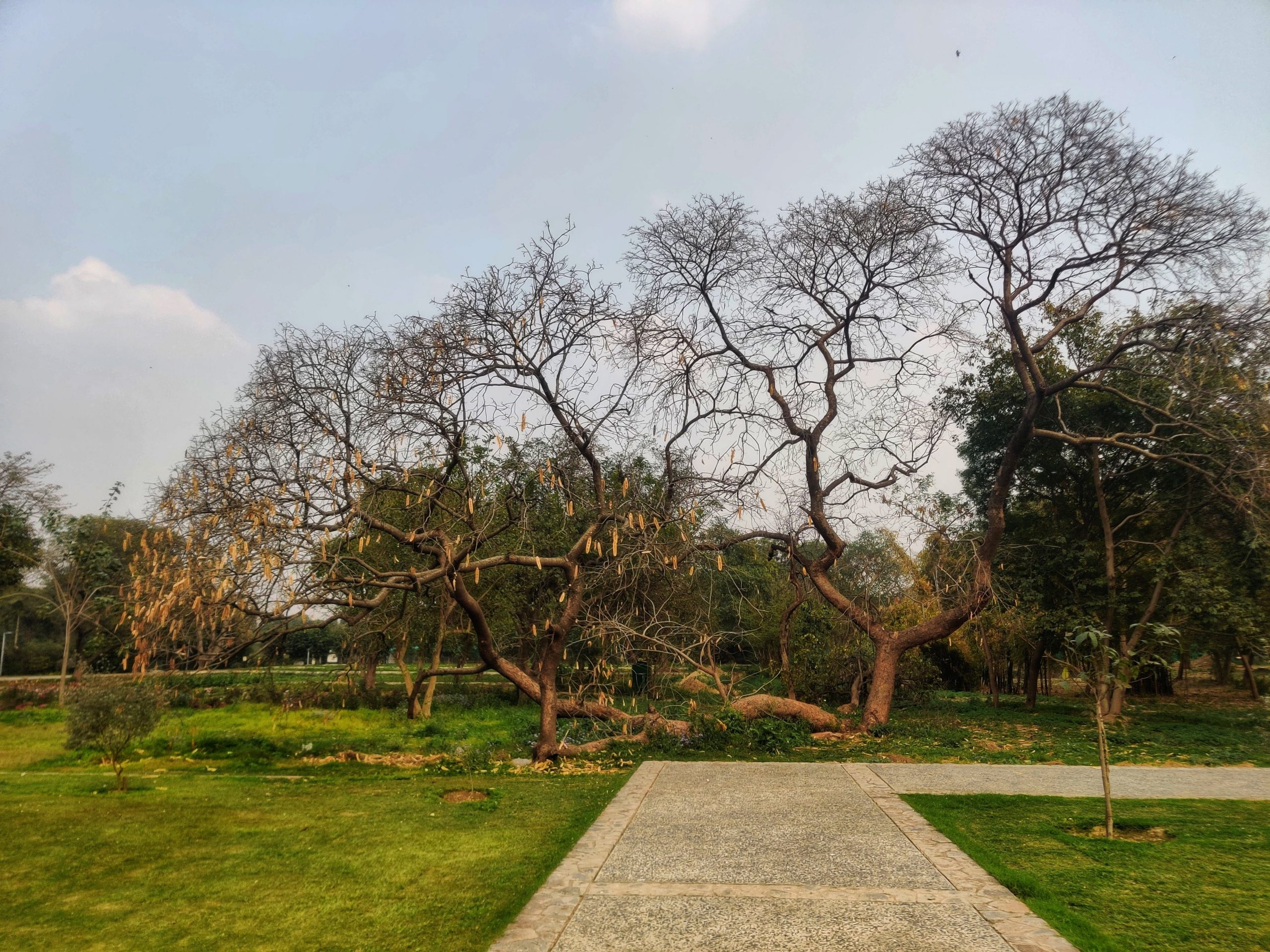 An old tree at Sunder Nursery, Delhi