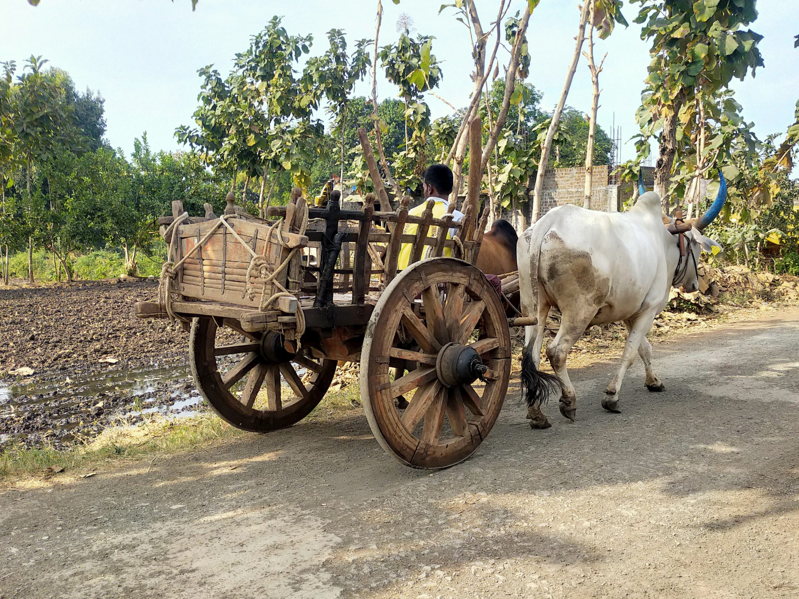 An ox cart