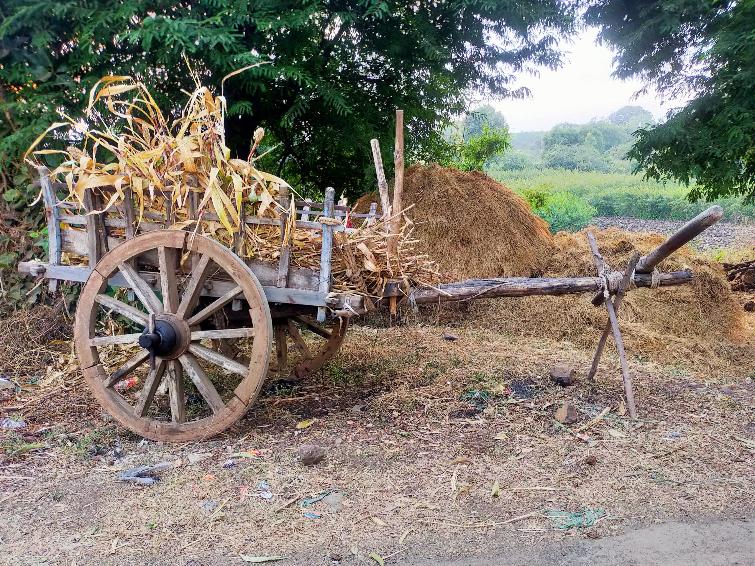 An oxcart