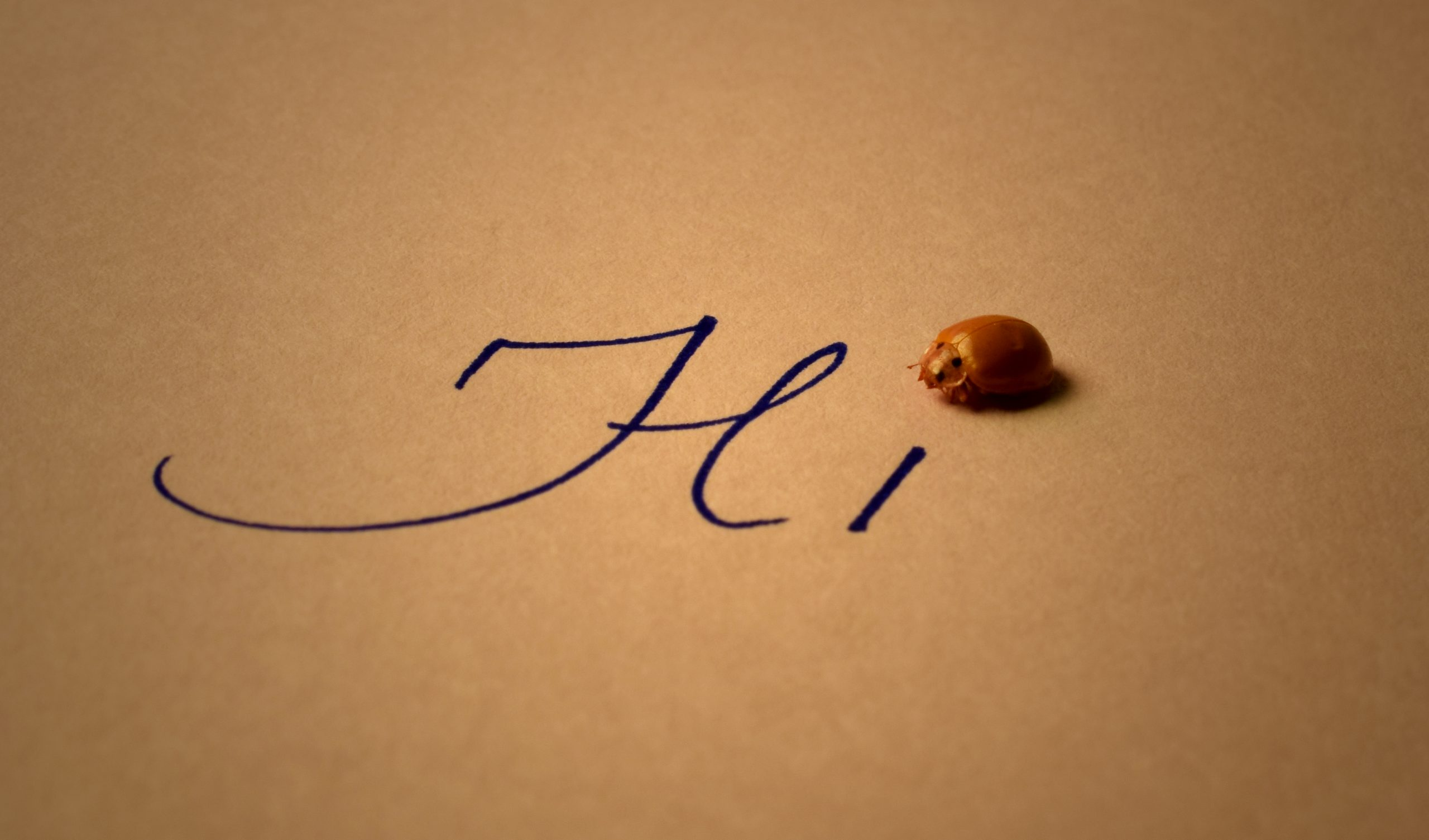 An insect and Hi word