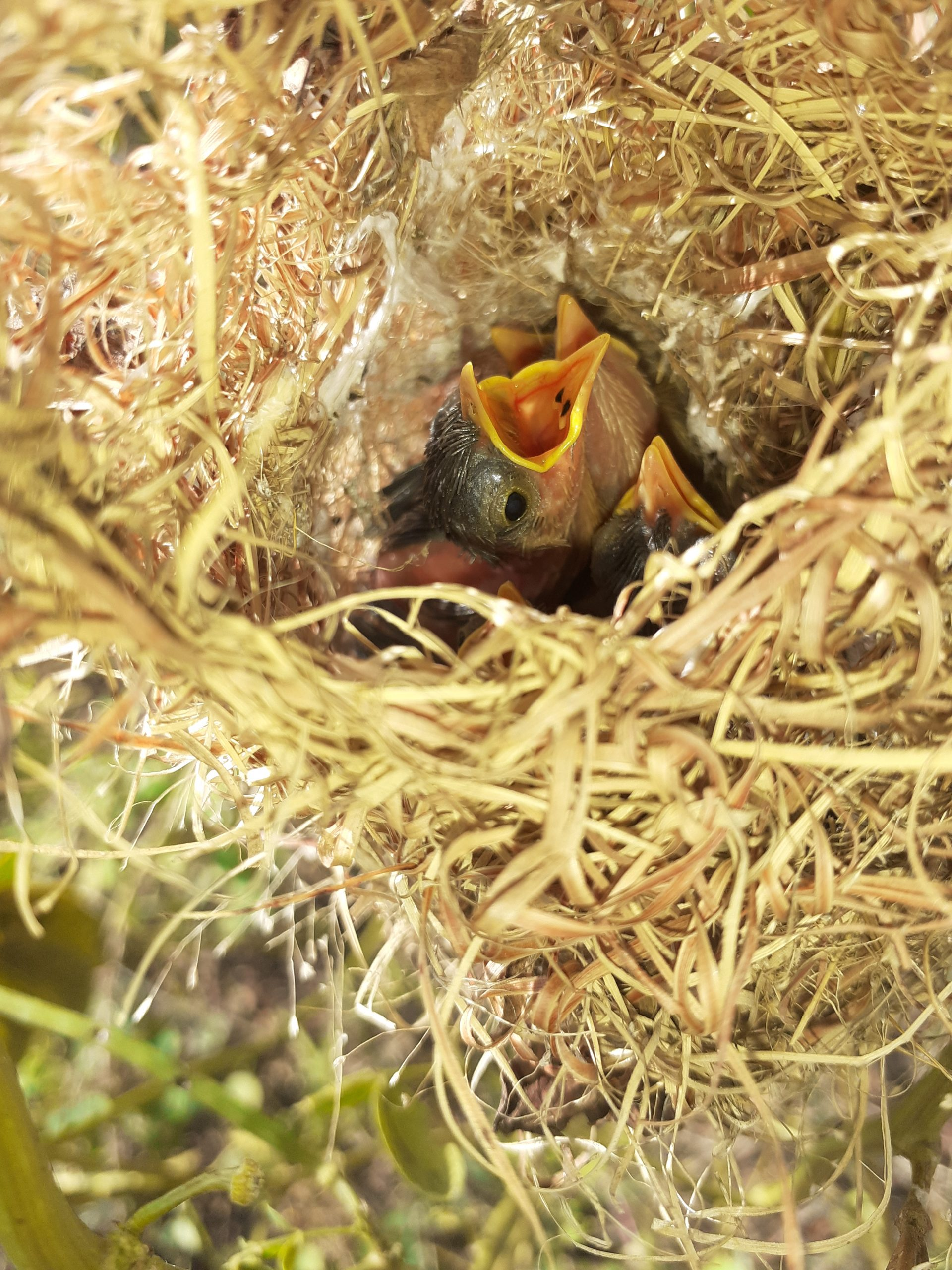 Little bird opening mouth