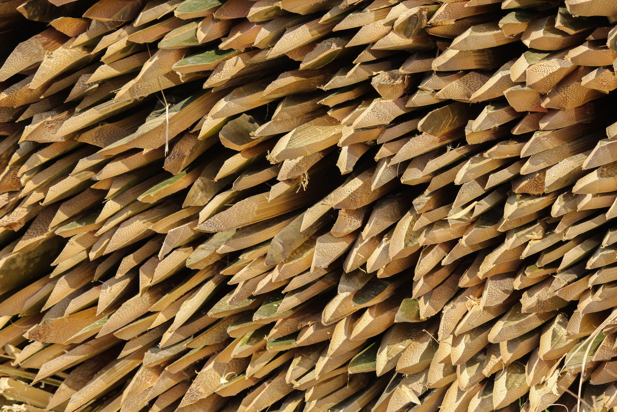 Pointy Bamboo Sticks