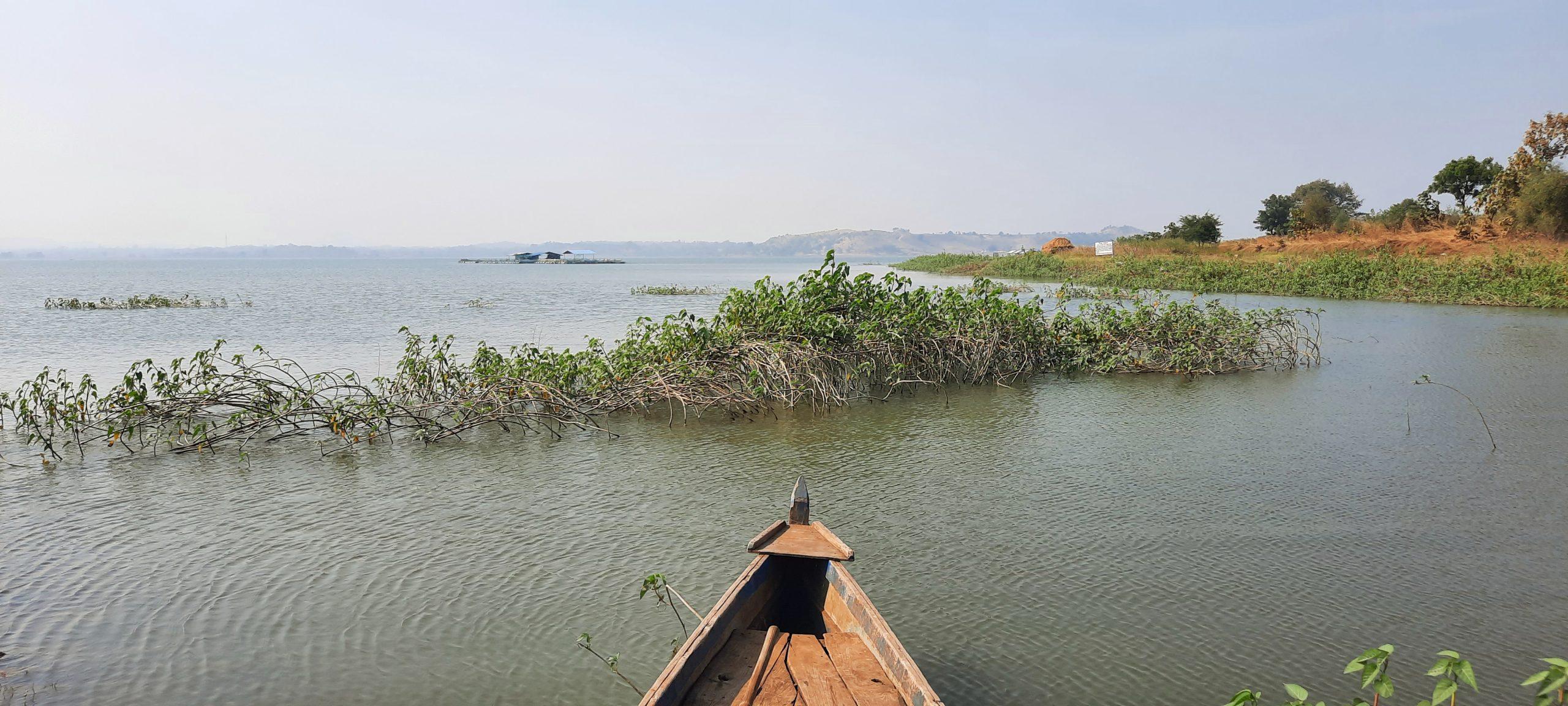 A boat and aquatic plants