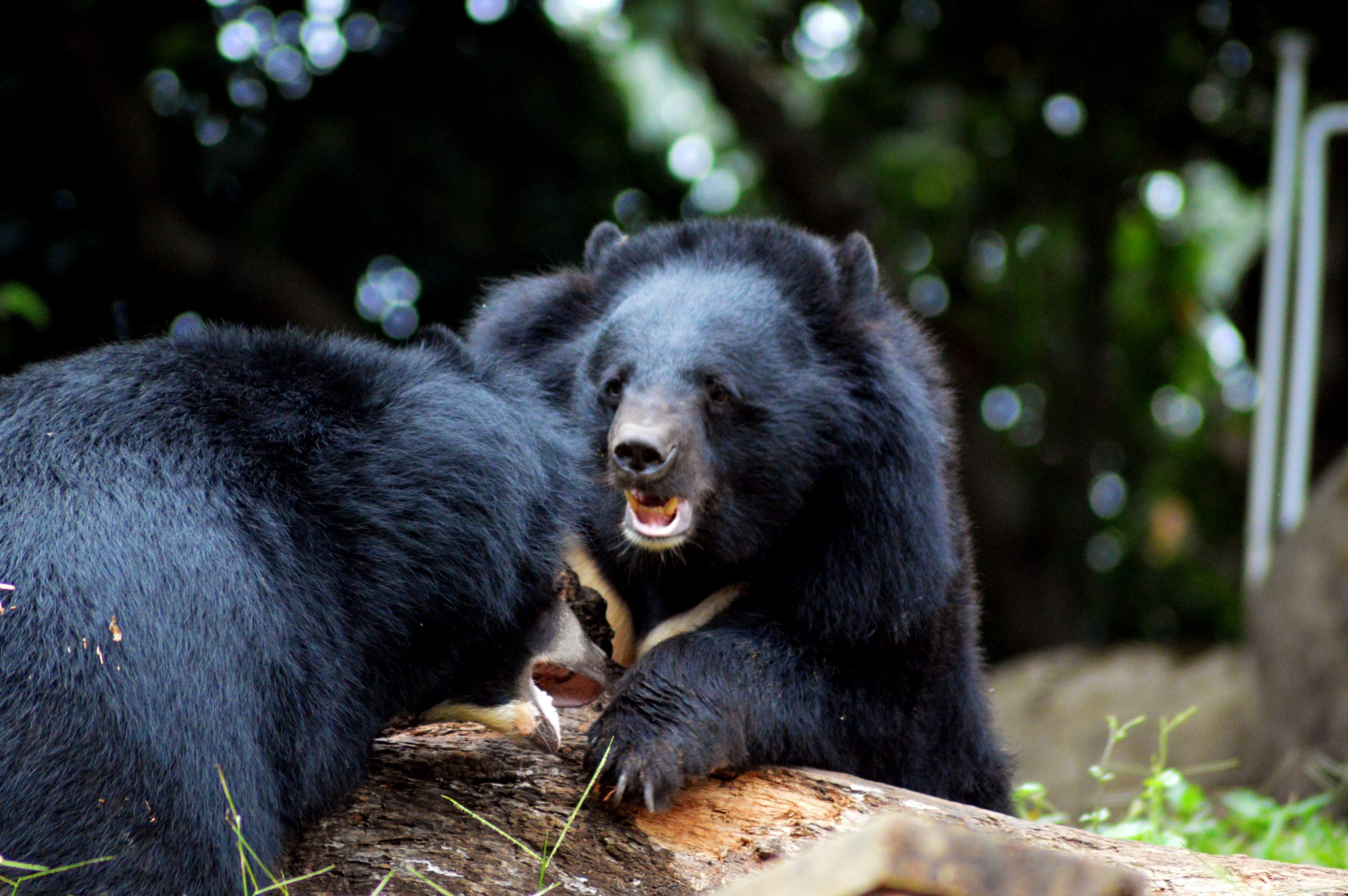 Bear in a jungle