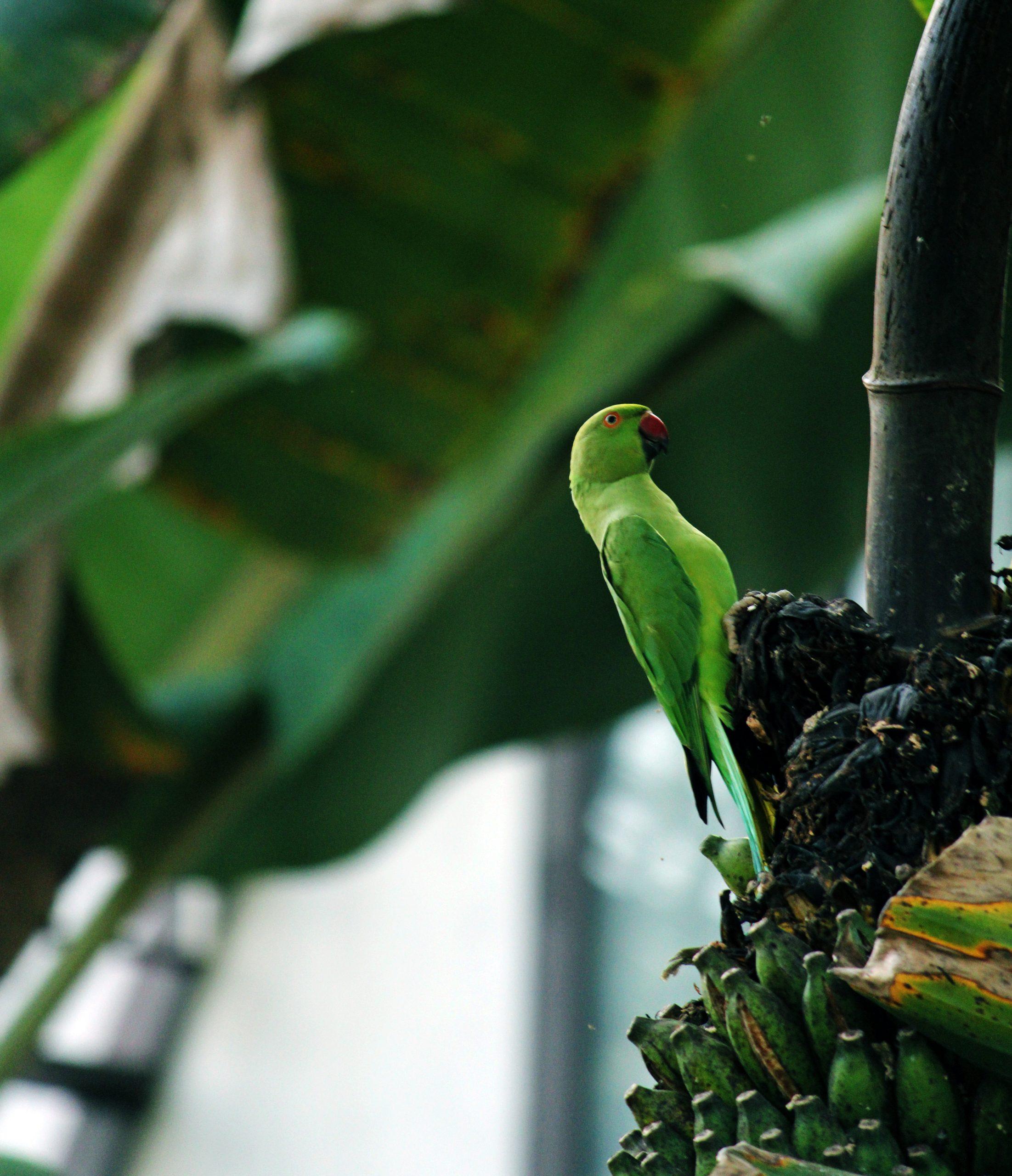 Beautiful Parrot Close-up