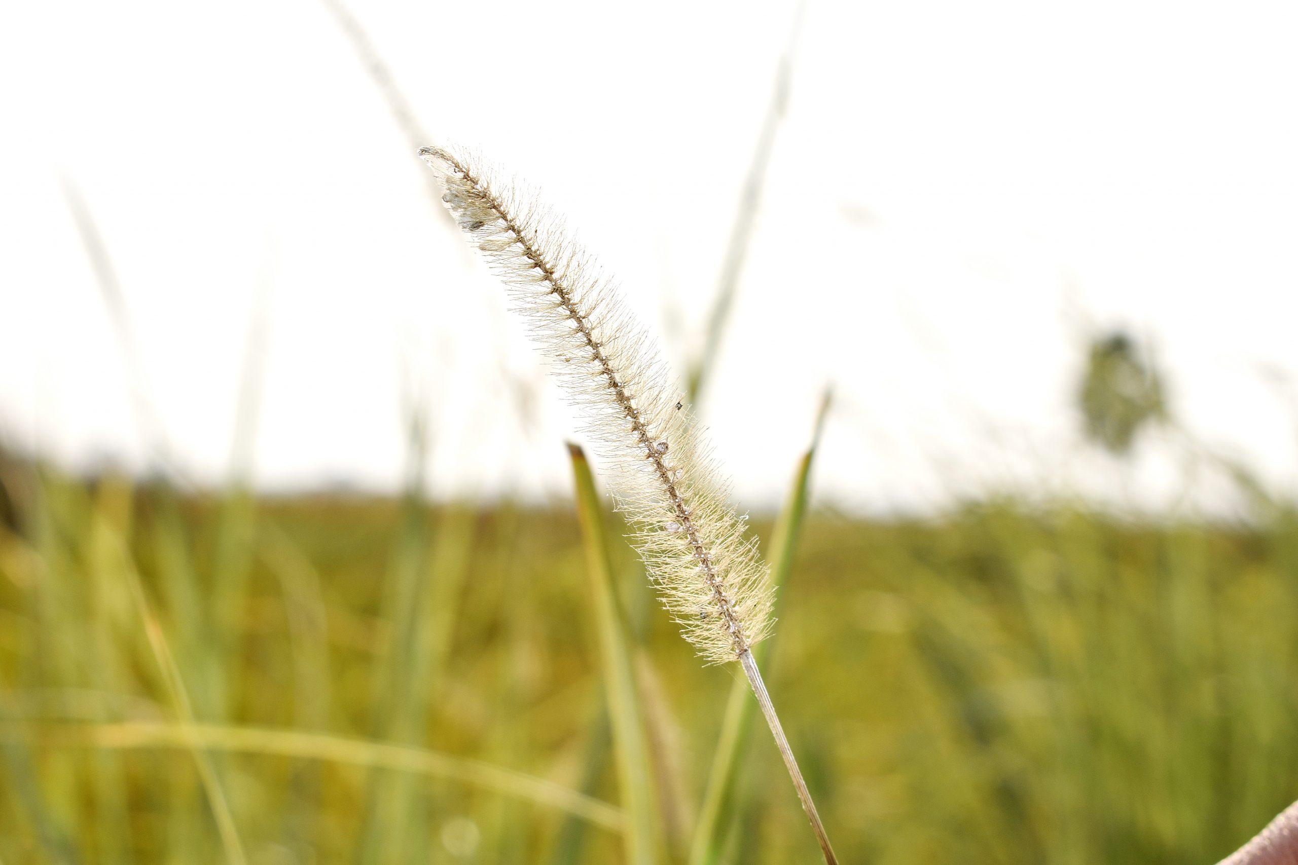 Macro view of plant
