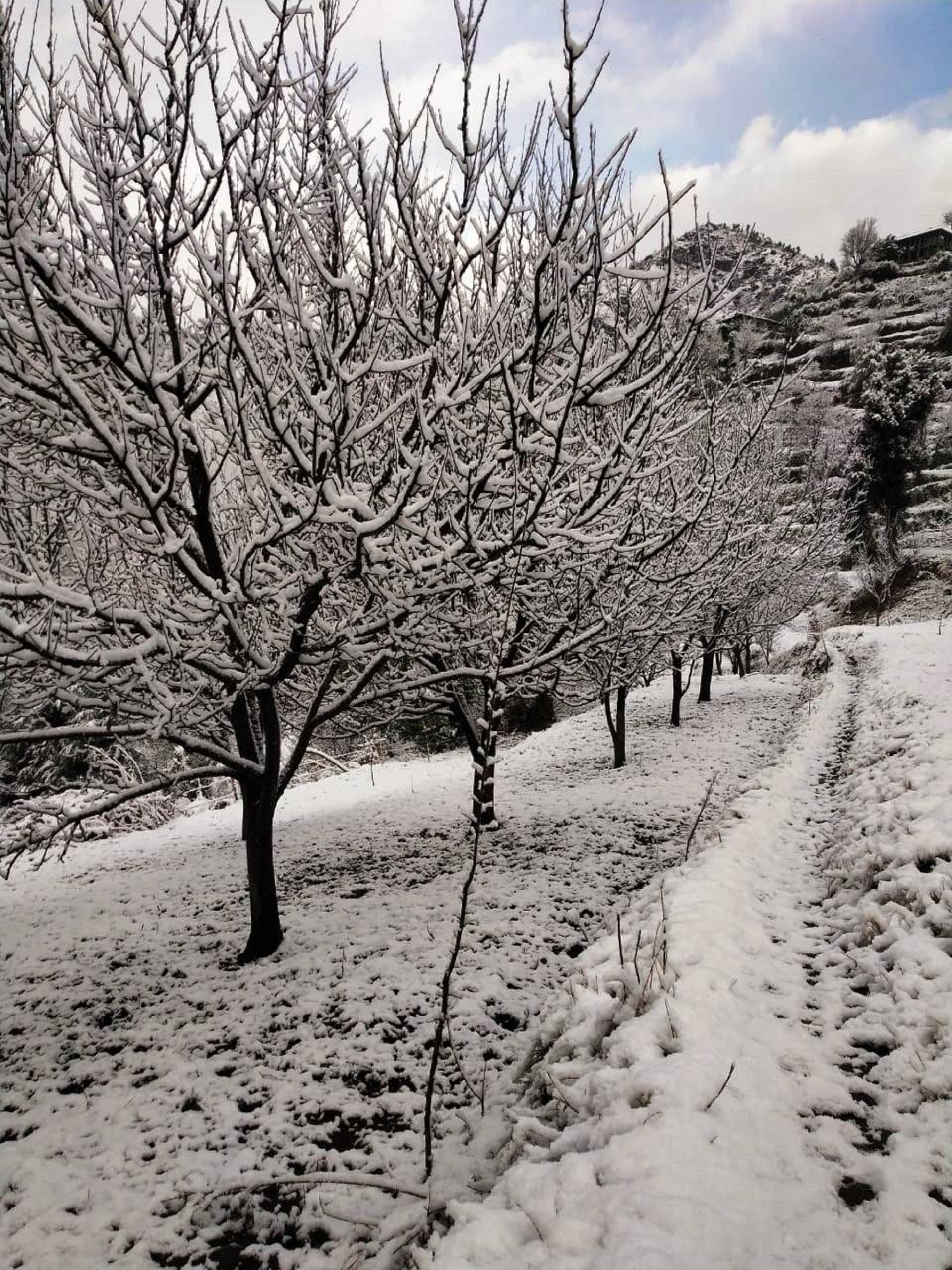 beauty of snowfall