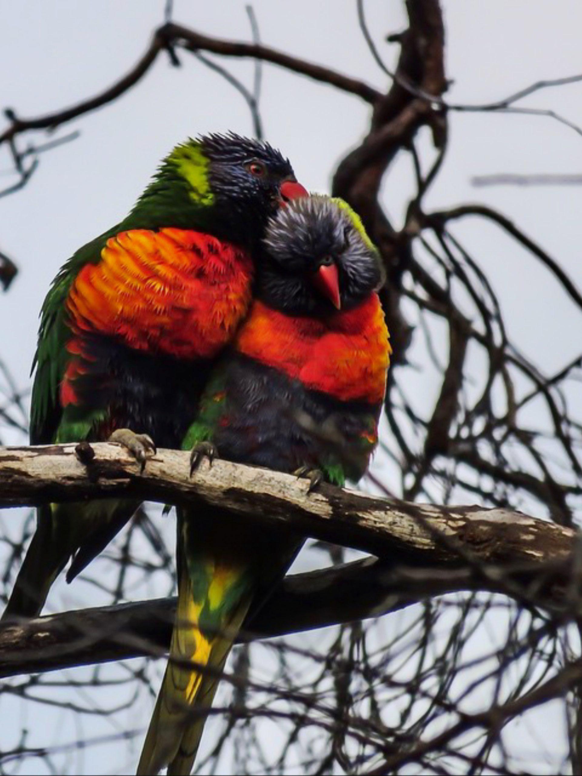 Birds sitting on tree