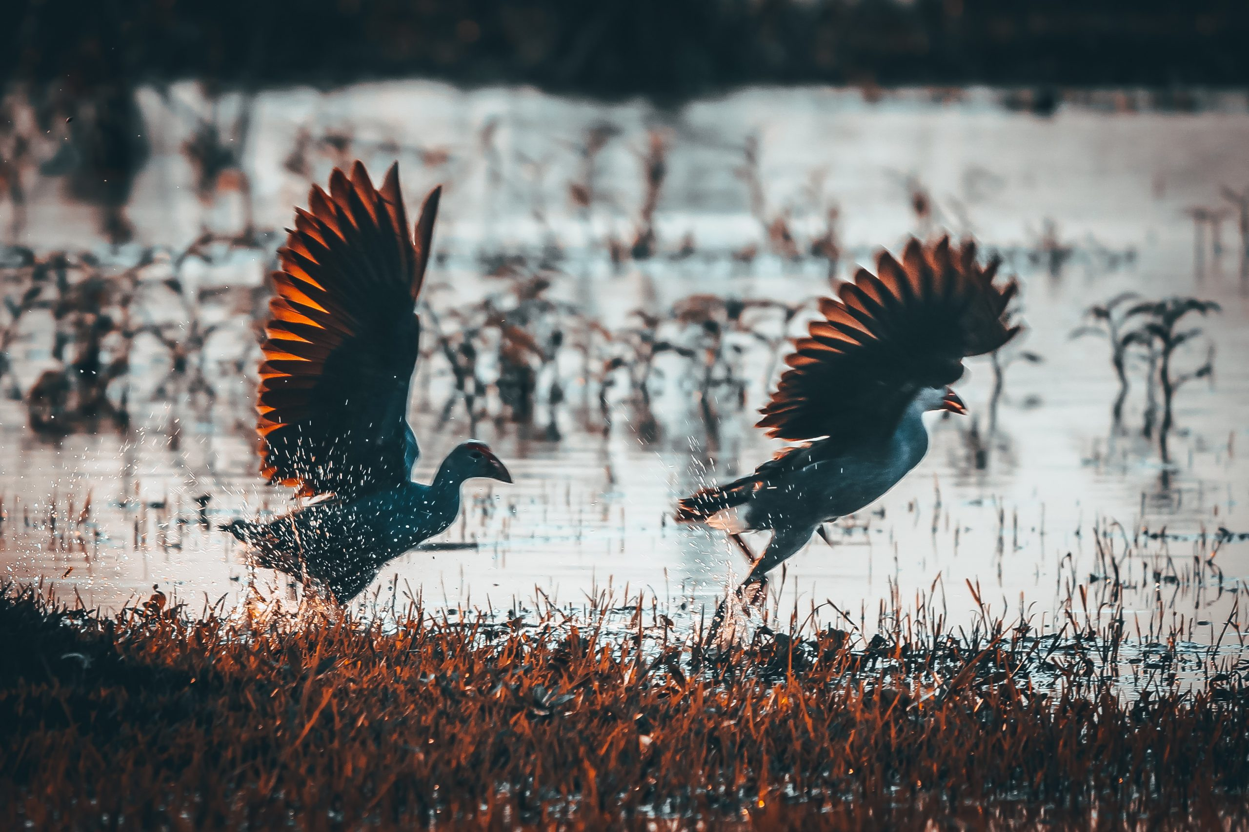 Birds flying over a pond