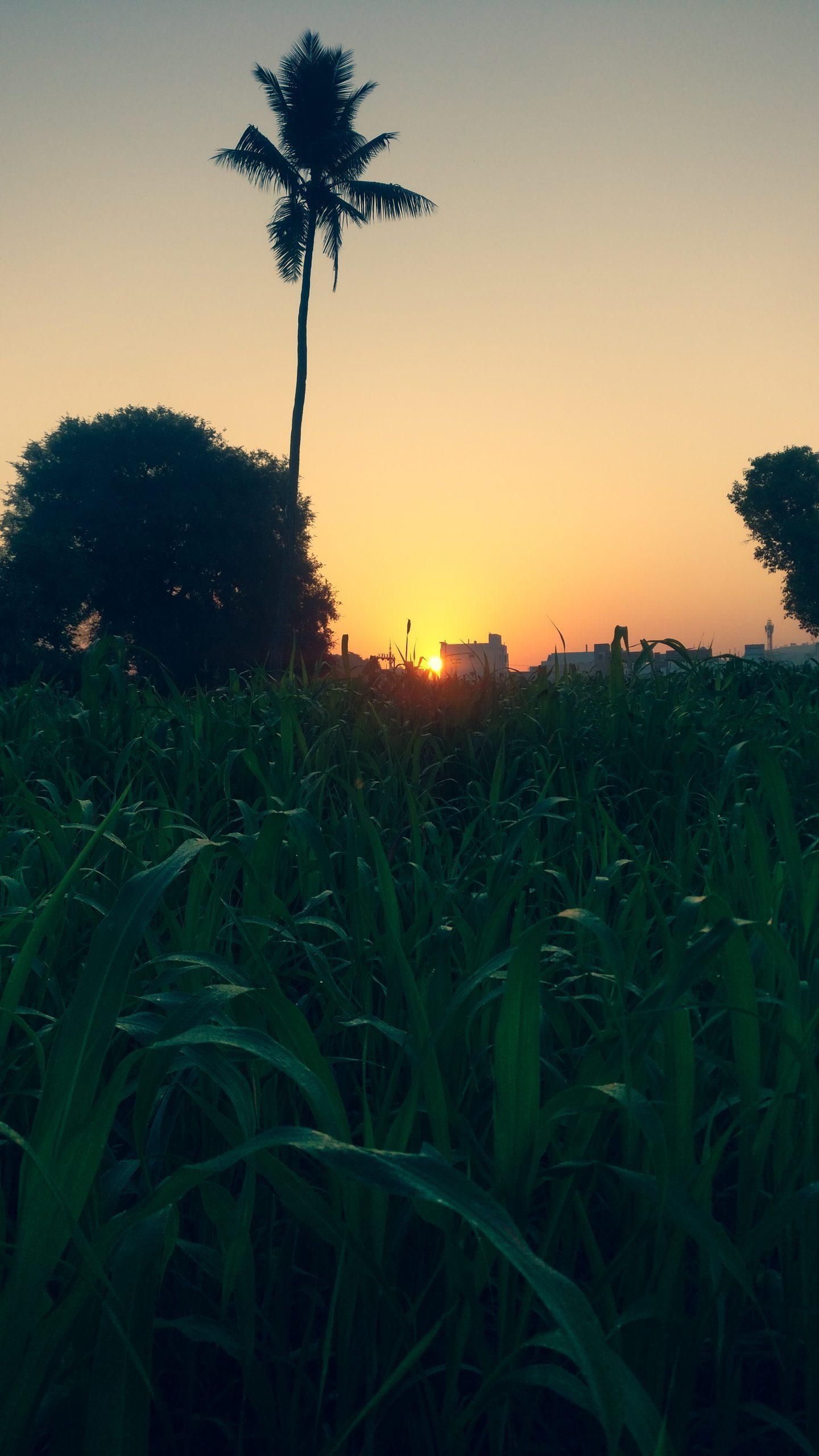 Sunset through a field