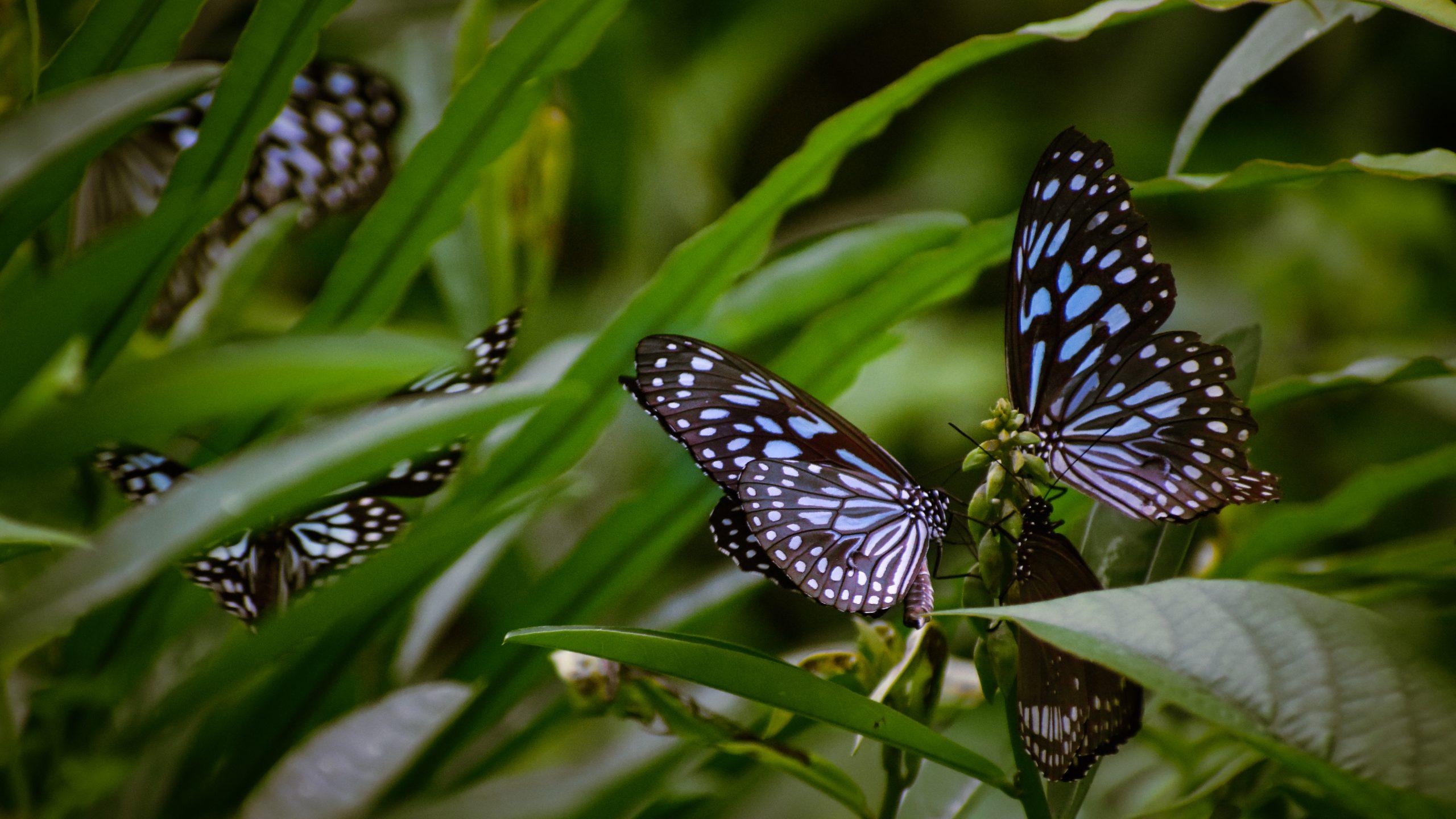 butterflies on leaf
