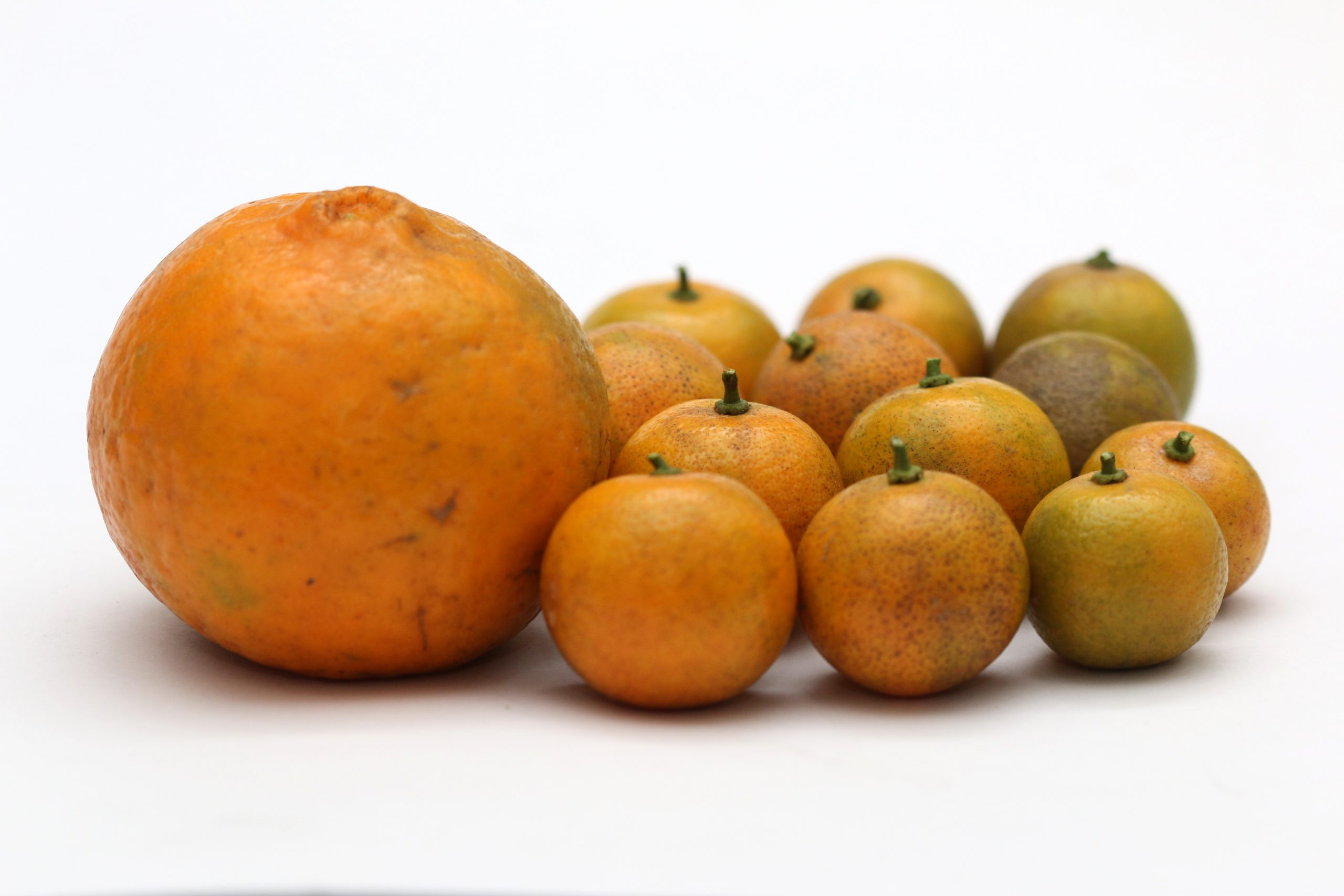 Calamansi and oranges