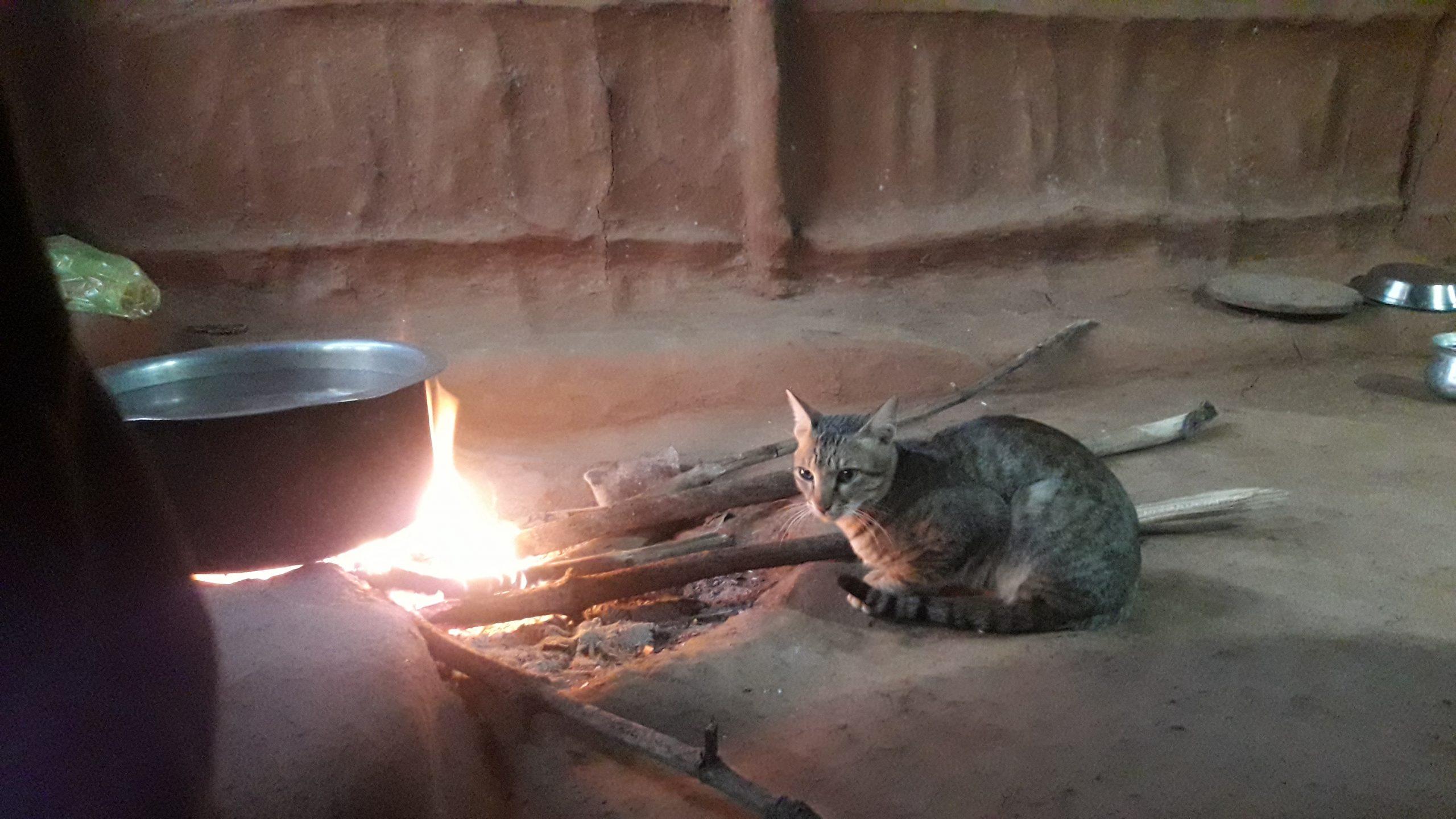 A pet cat near clay stove