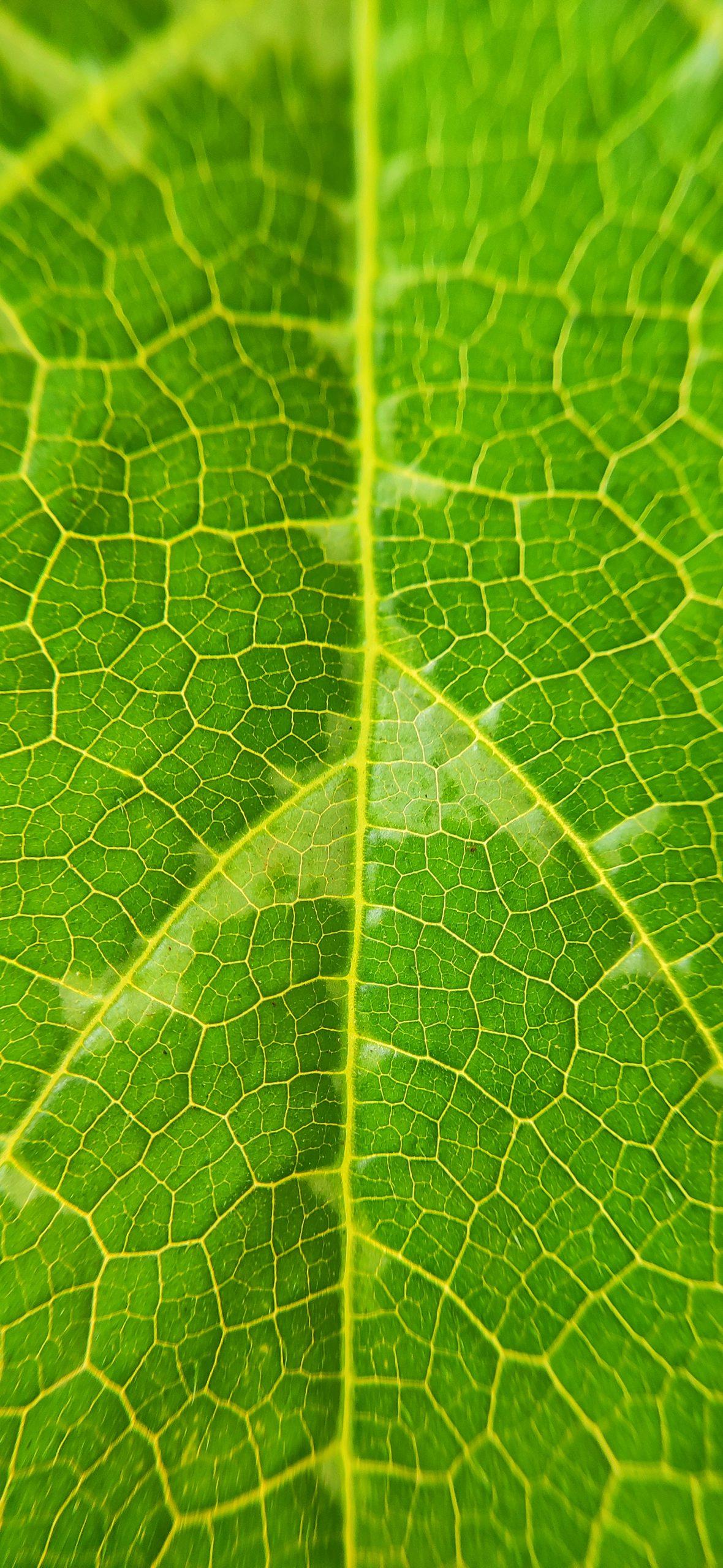 Close of a plant leaf