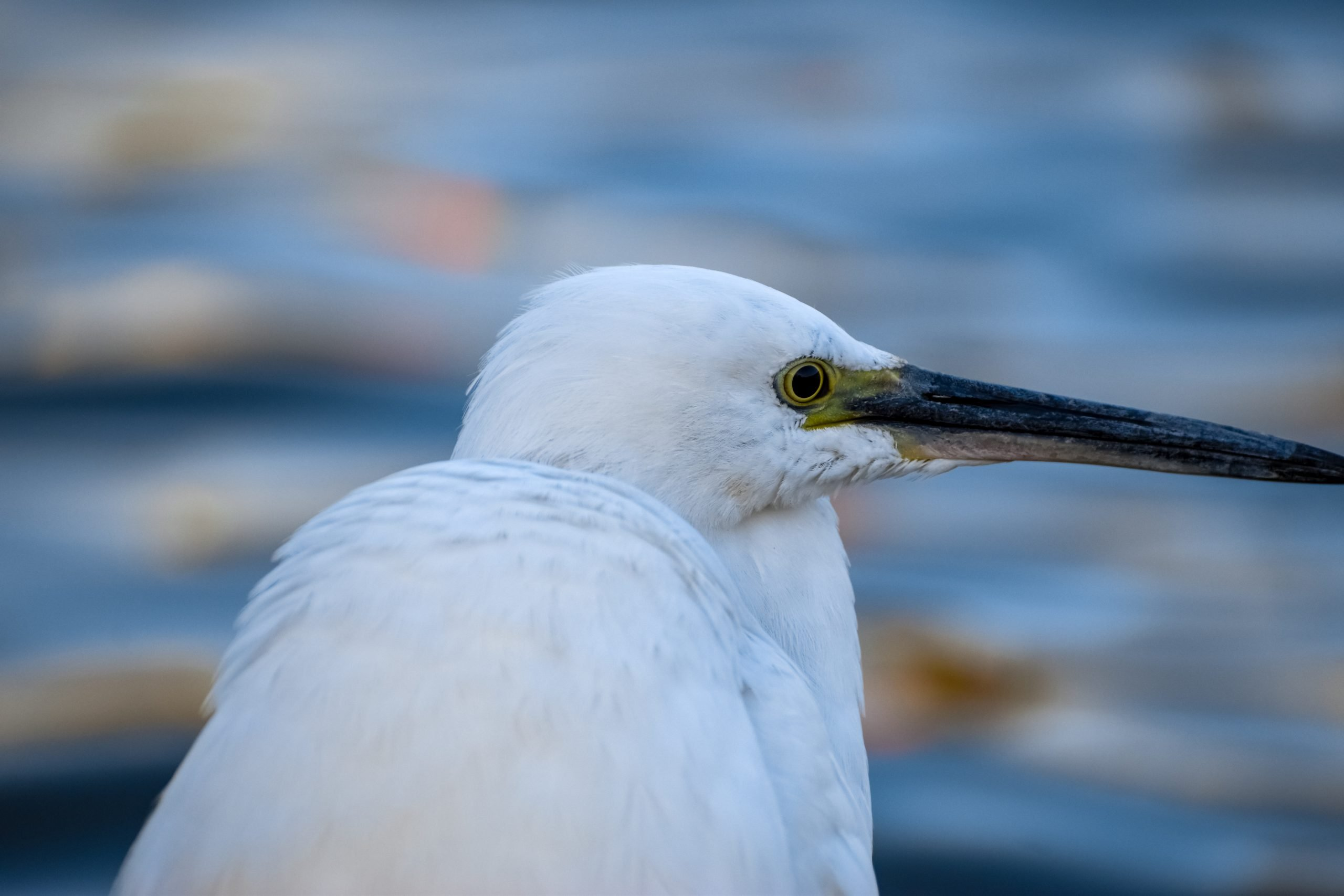 A white bird with long beak