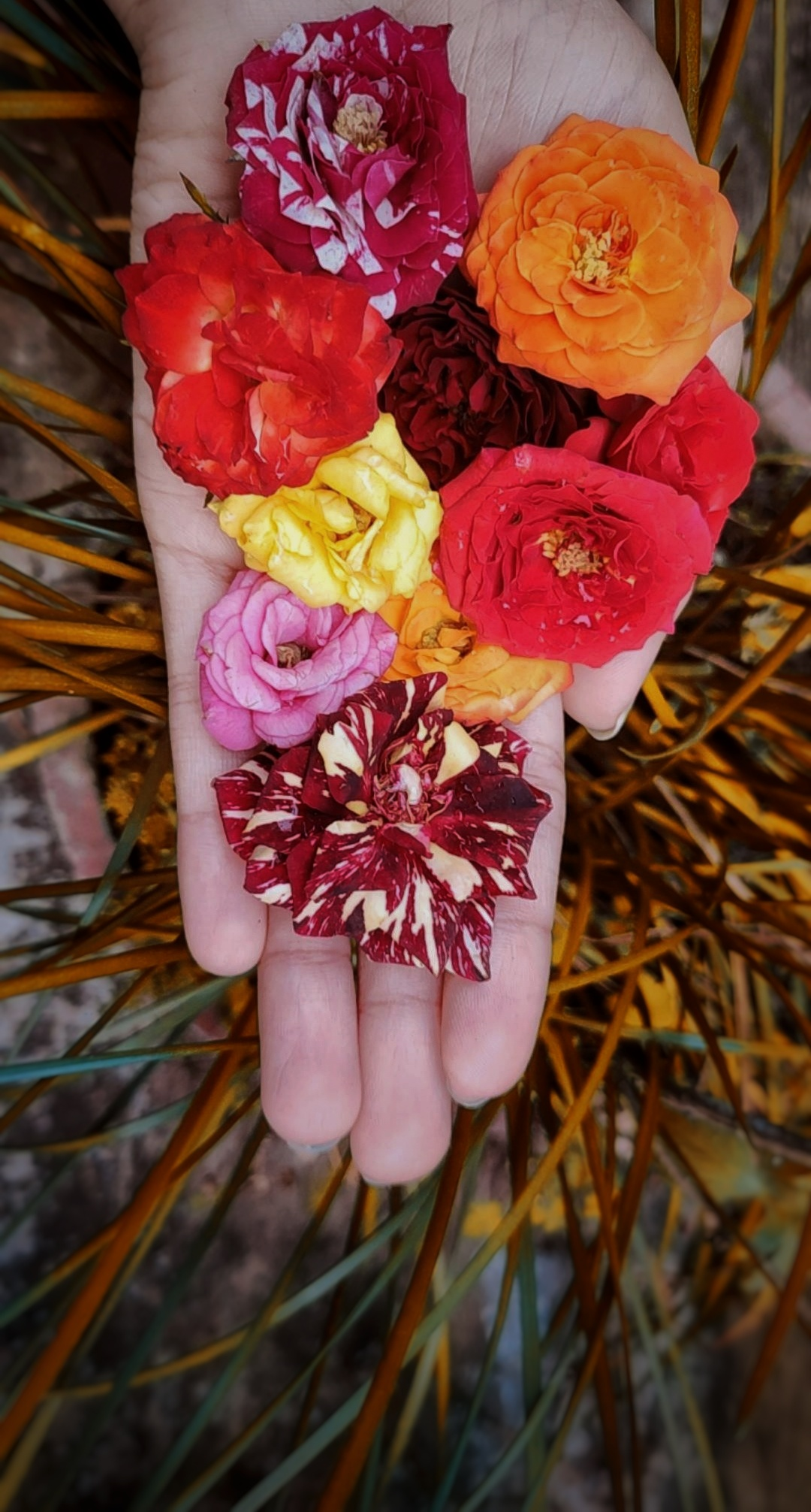 Colourful flowers in hand