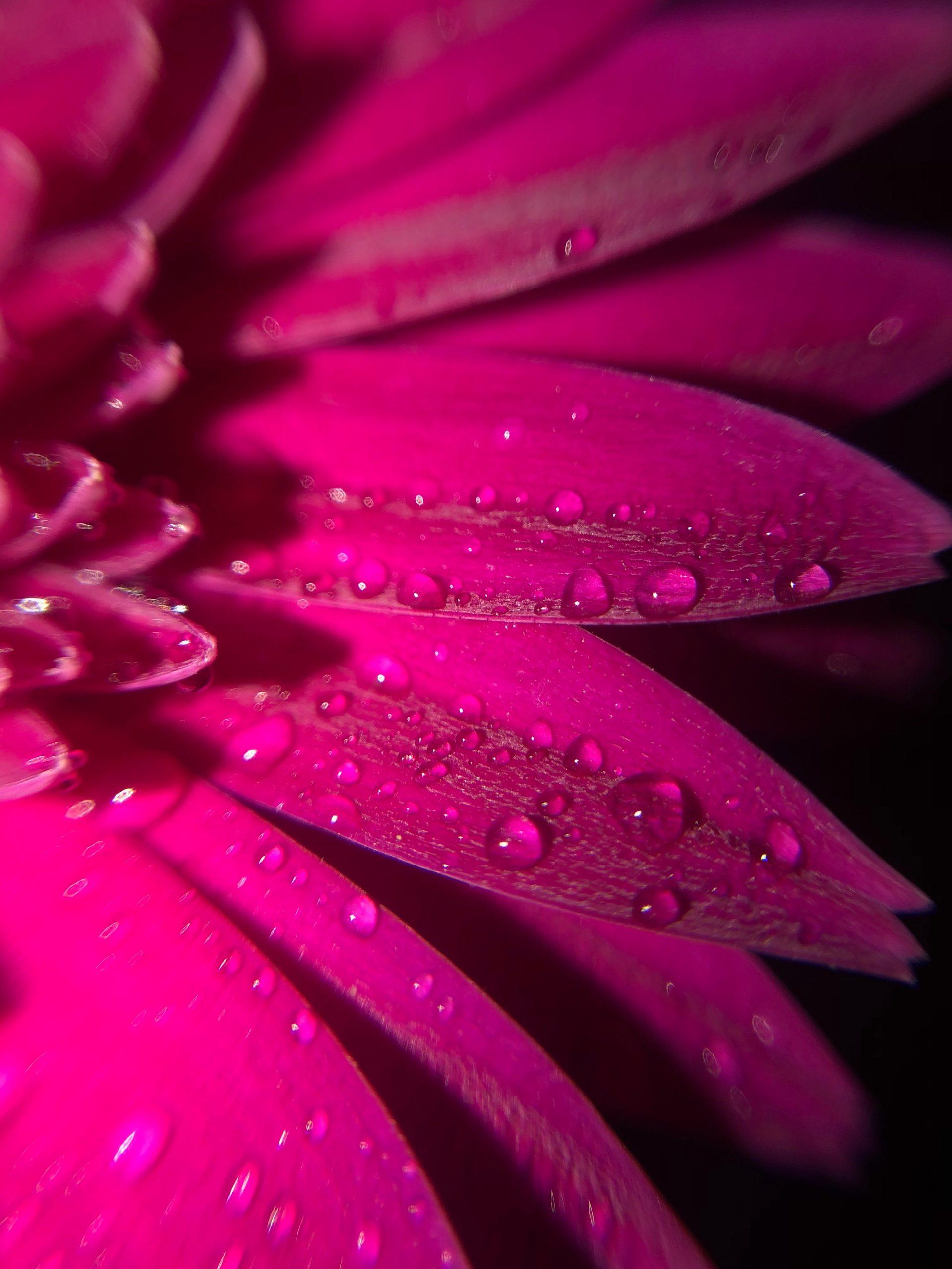 Dew drops on a flower