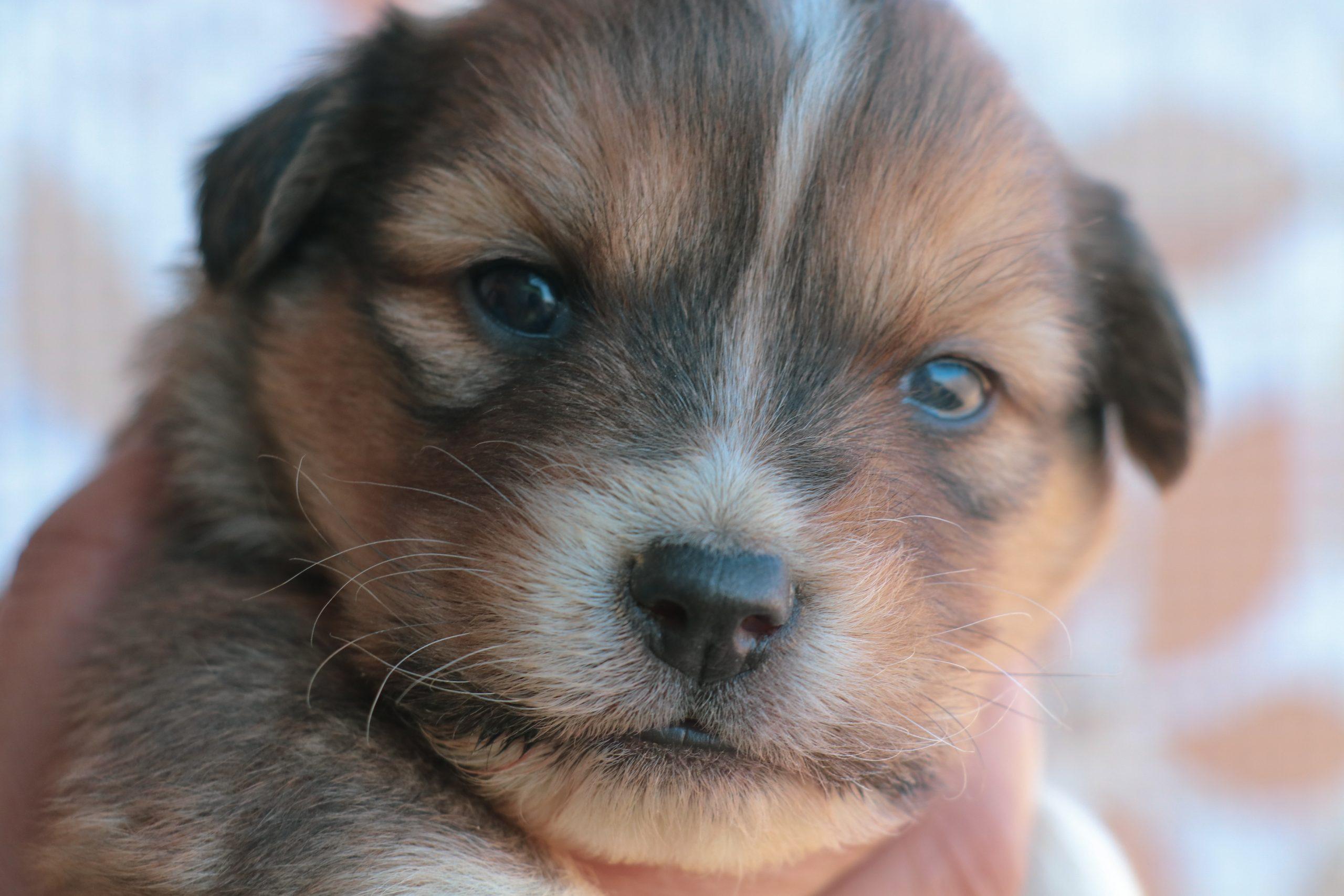 A baby dog