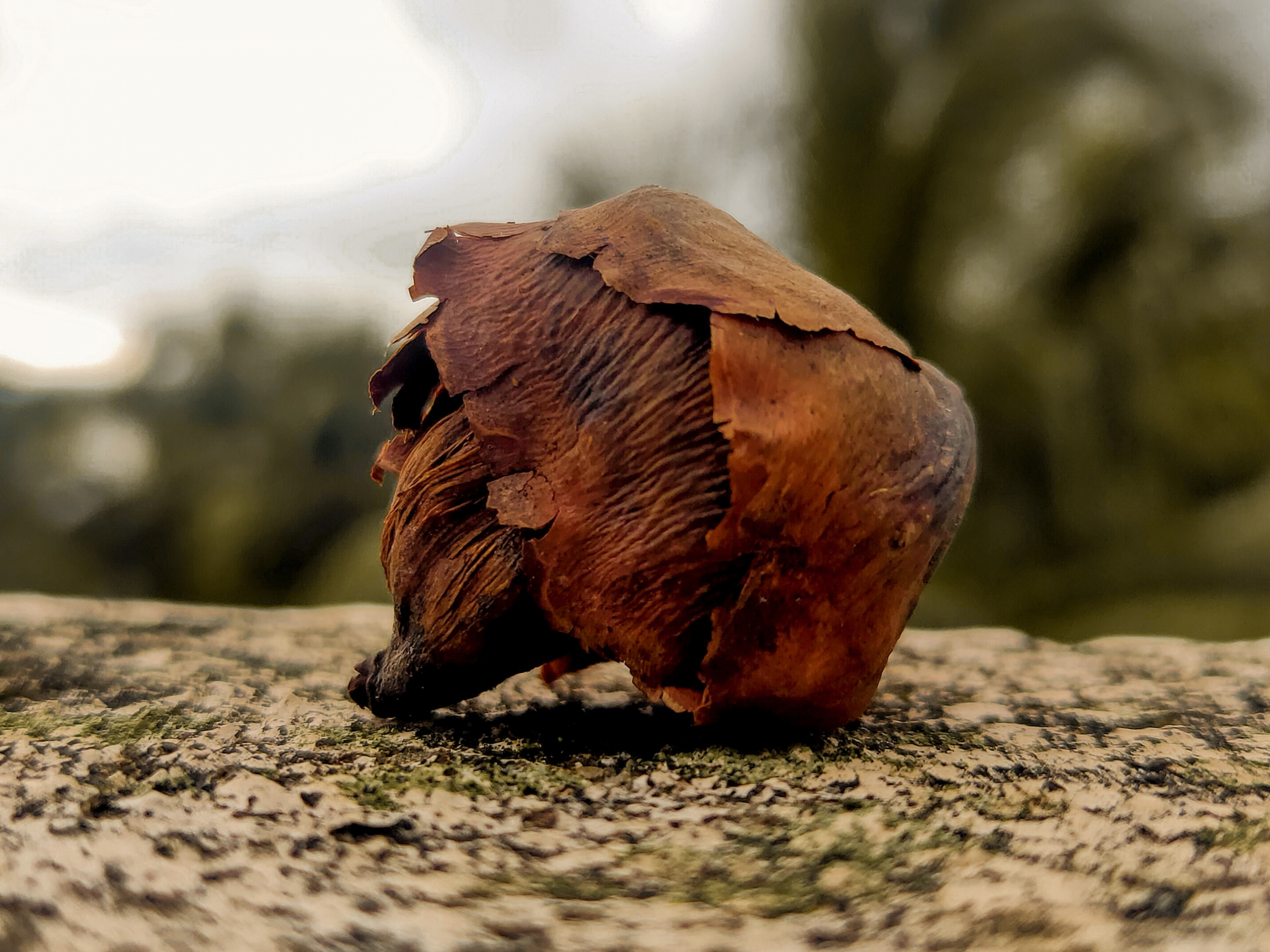 A coconut shell