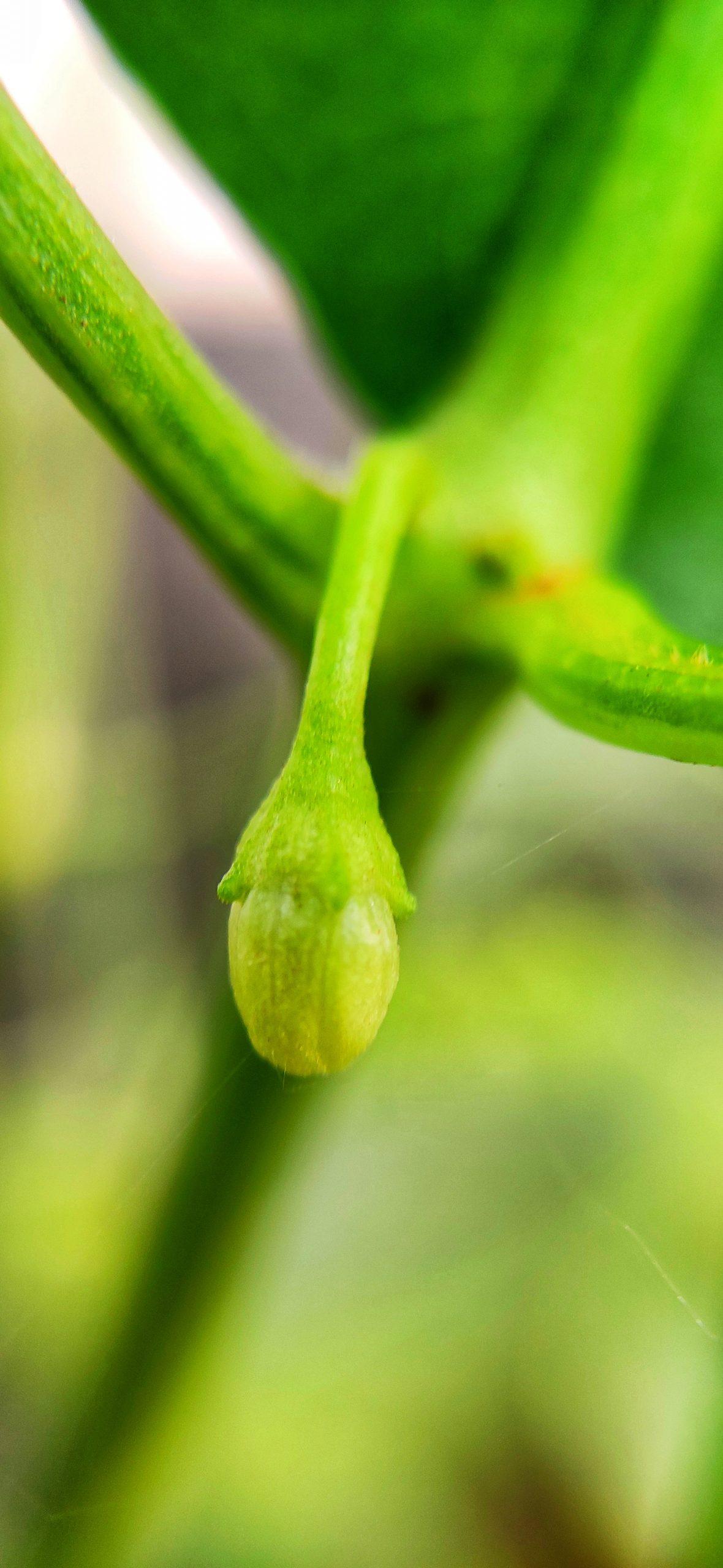 A fruit bud