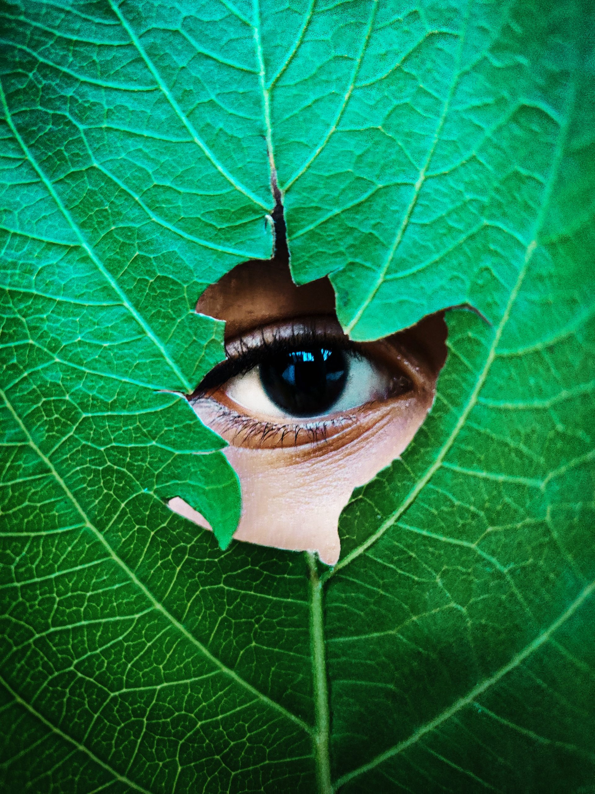 Looking through a hole in a leaf