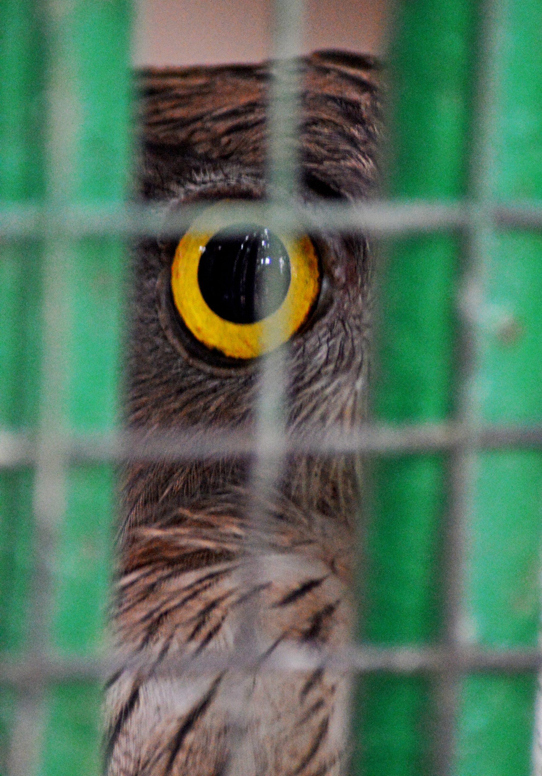 owl's eye through a cage