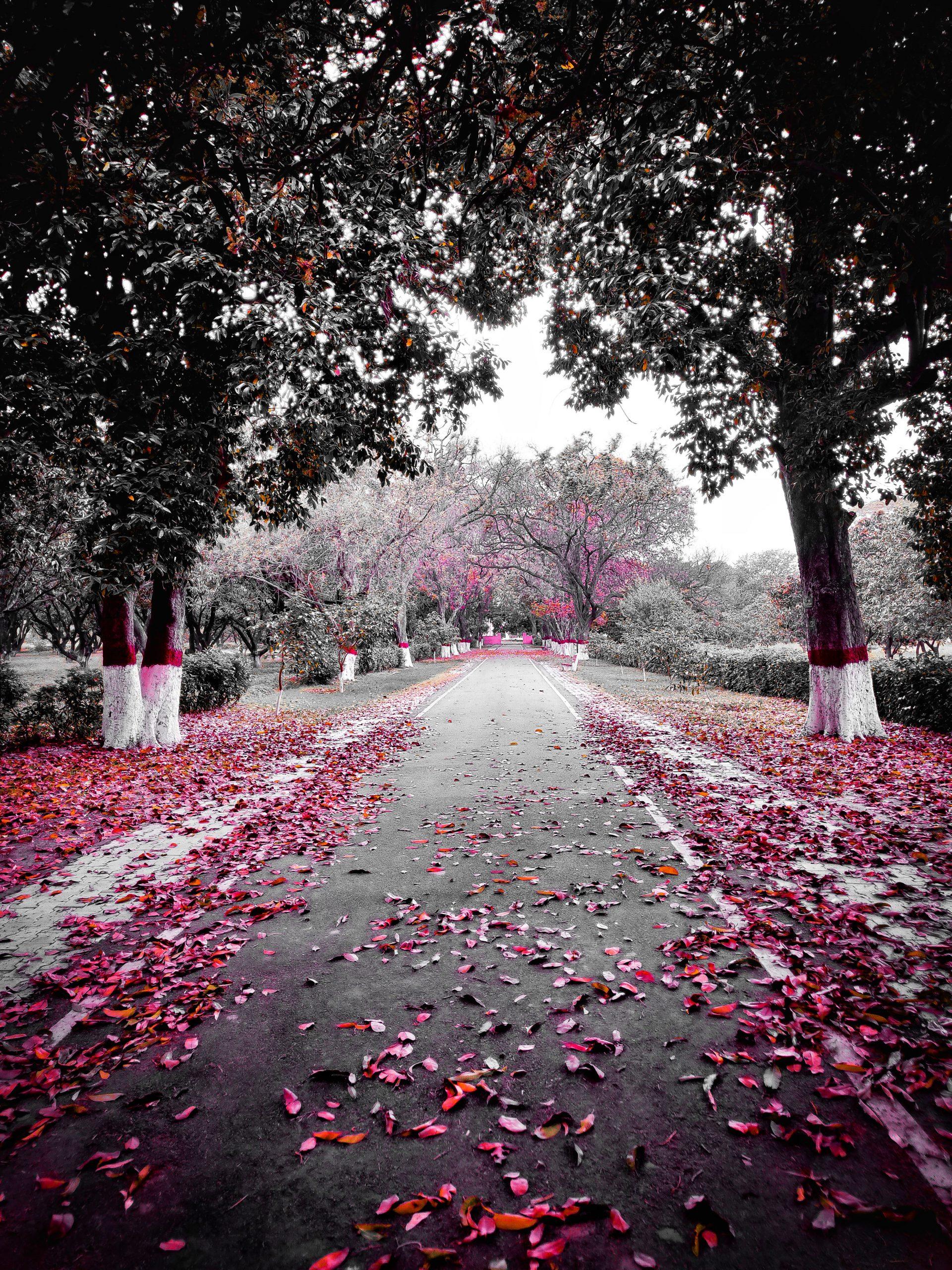 Fallen leaves on a road